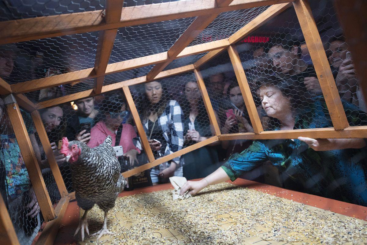 Bingo de galinha no Little Longhorn Saloon