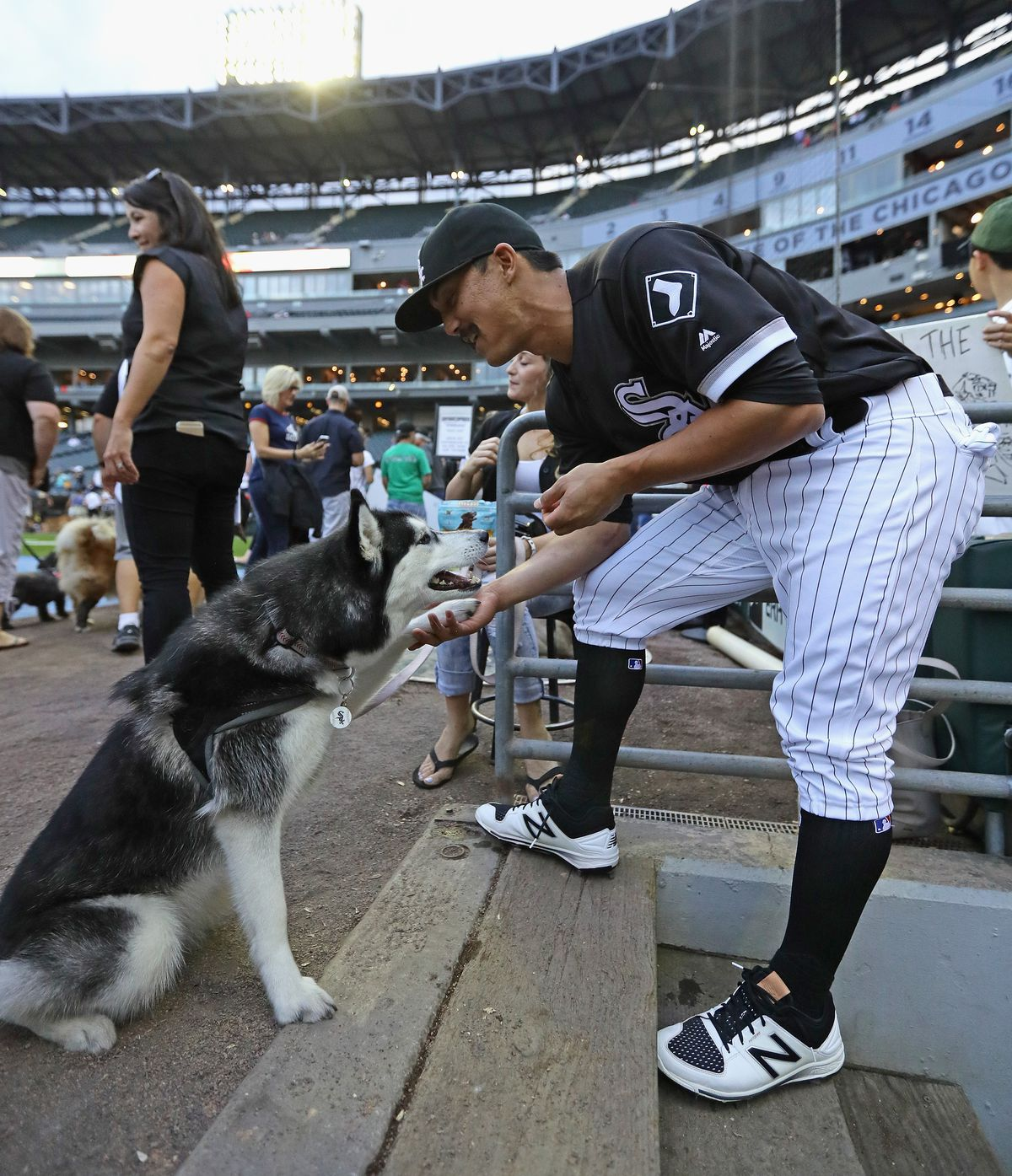 """Tyler Saladino plays with his dog """"Luna"""" as fans parade around U.S. Cellular Field during the annual """"Bark in the Park"""" day."""