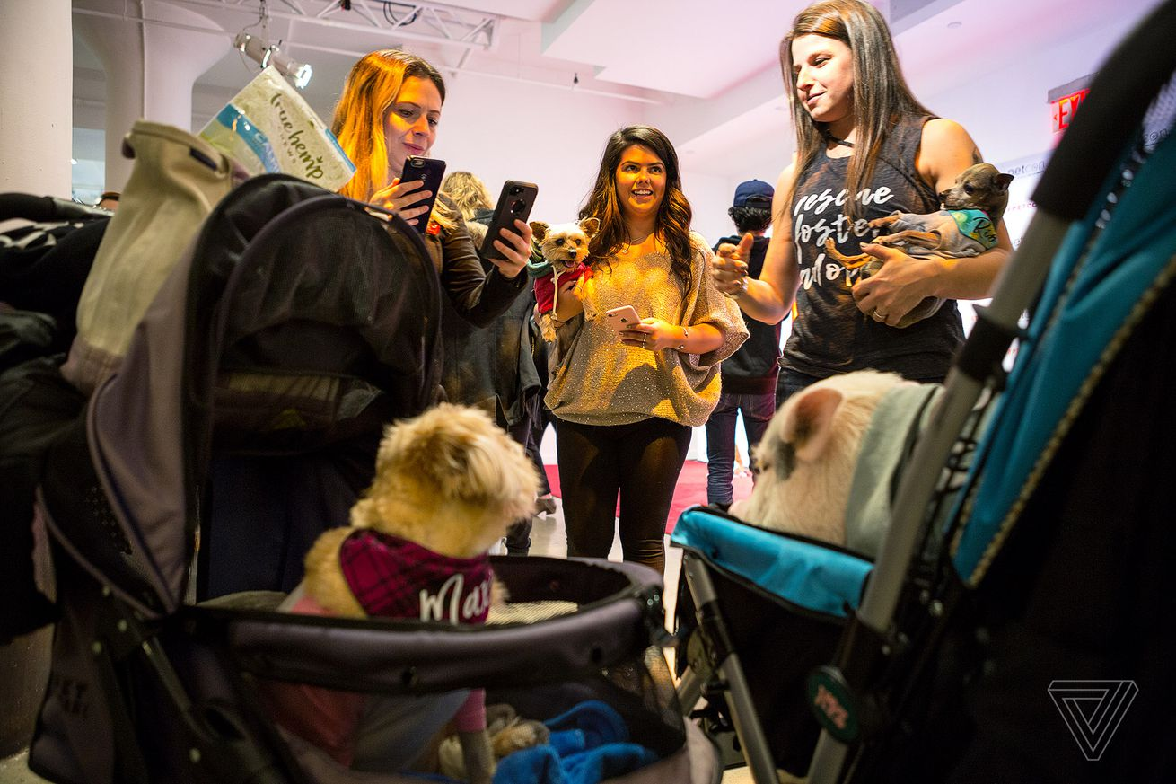 at petcon instagram famous dogs meet their adoring fans
