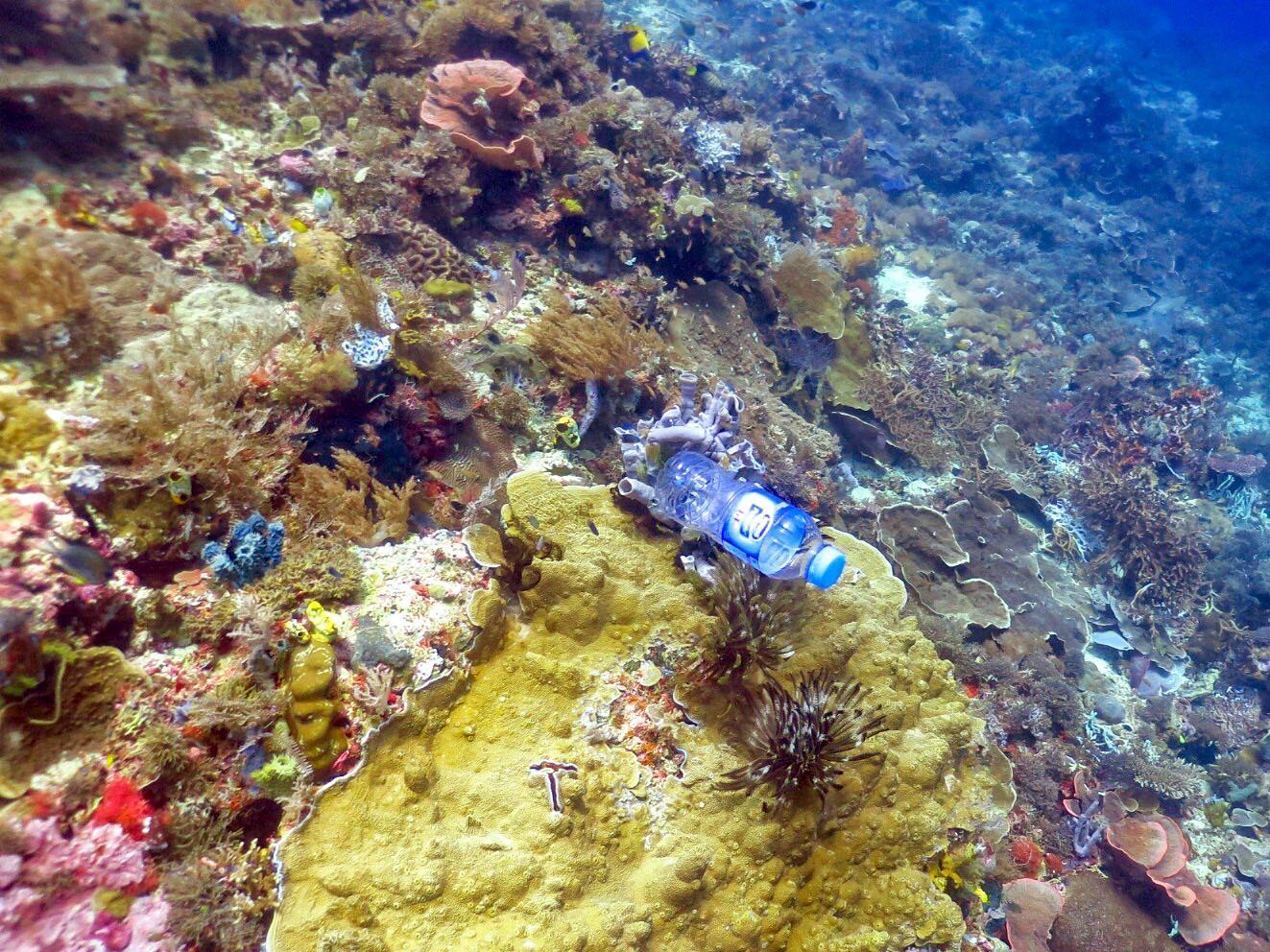 an overview of the environment of the coral reefs And reflecting the results flexibly in the review of current management and  resource use schemes  for humans, coral reefs in the tropical and subtropical  areas.