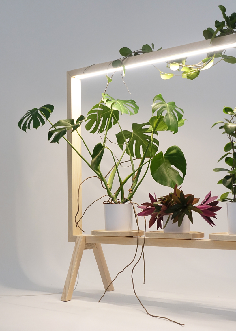 This light-up frame turns your plants into art