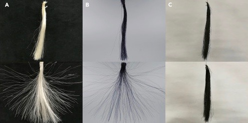 Top row; No static; Bottom row: static. A) Natural blonde hair (minus the head it was attached to). B) Hair dyed with a conventional dye. B) Graphene-dyed hair.