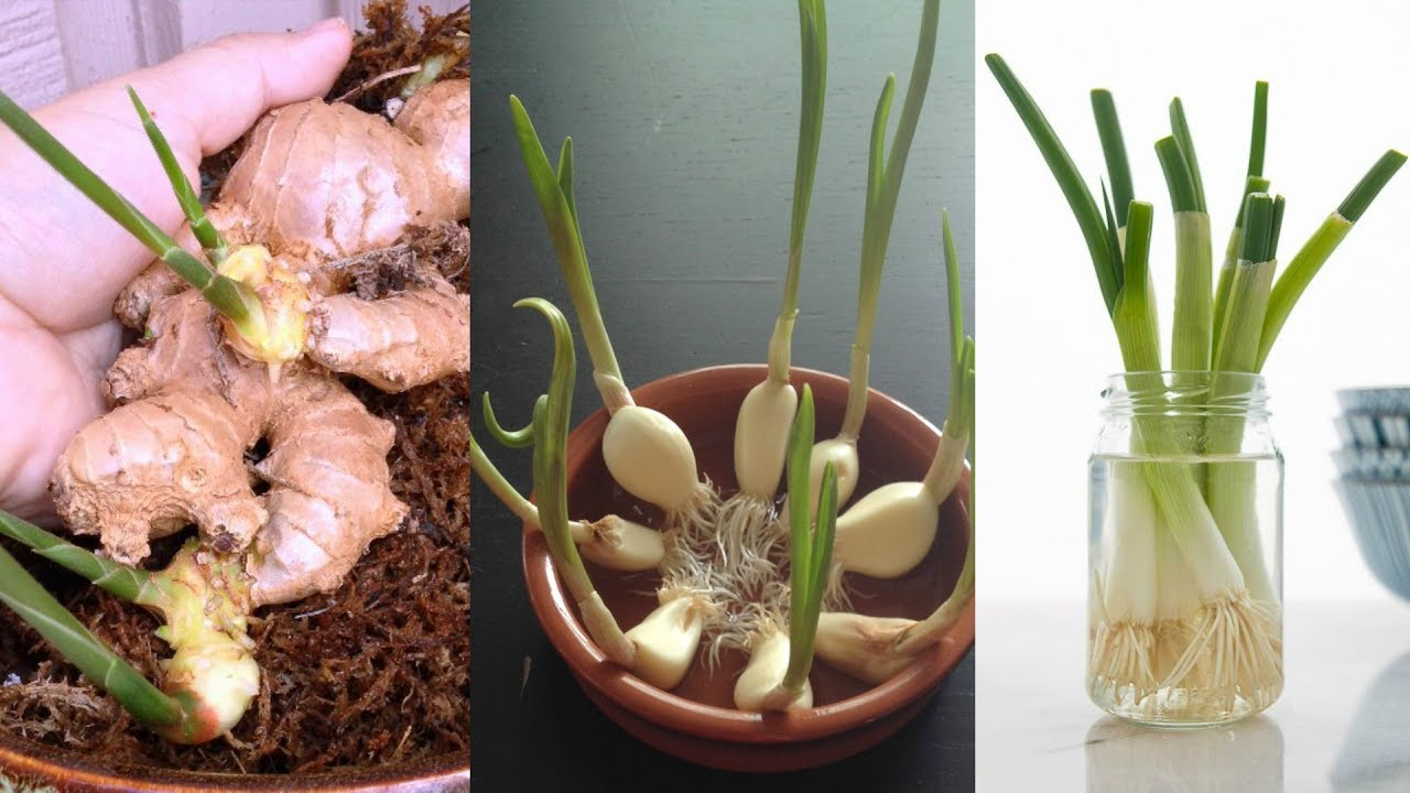 Top 10 Foods To Buy Once And Regrow Forever