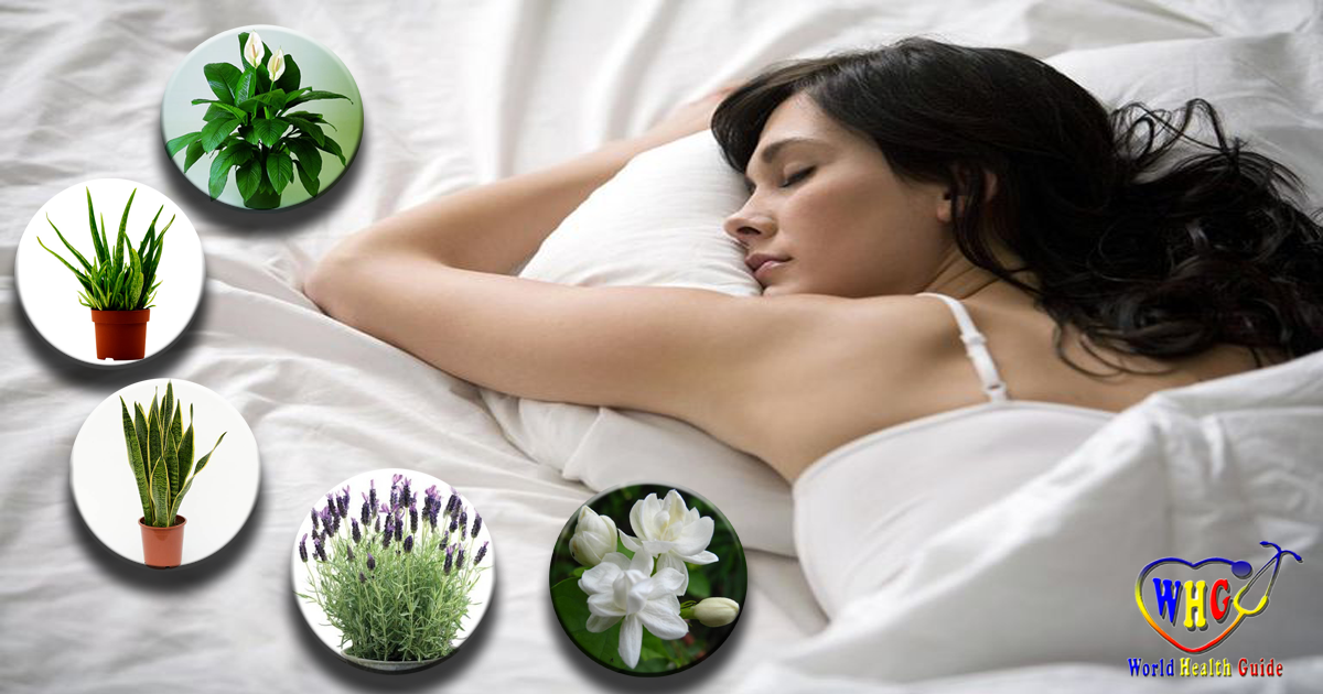 Top 10 Amazing Plants to Have in Your Bedroom to Help You Sleep Better