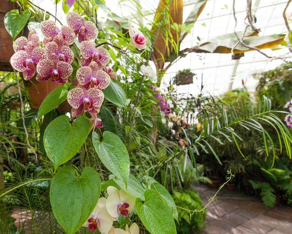 Inside Golden Gate Park's Conservatory of Flowers