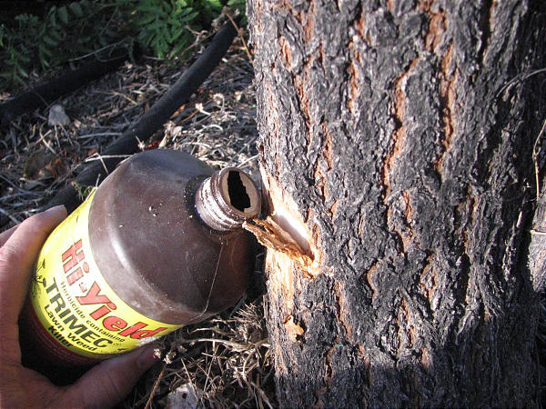 Fall Is Time To Get Rid Of Unwanted Trees Deseret News