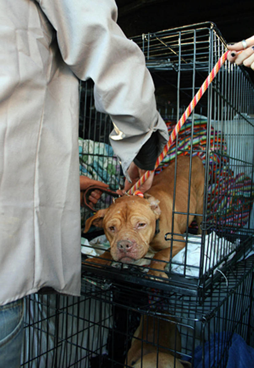 63 pit bulls from Idaho triple homicide scene sent to