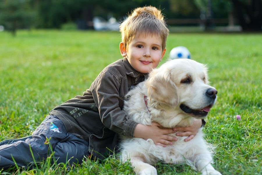 Pets: Top 10 Best Dogs Breeds for Your Kids