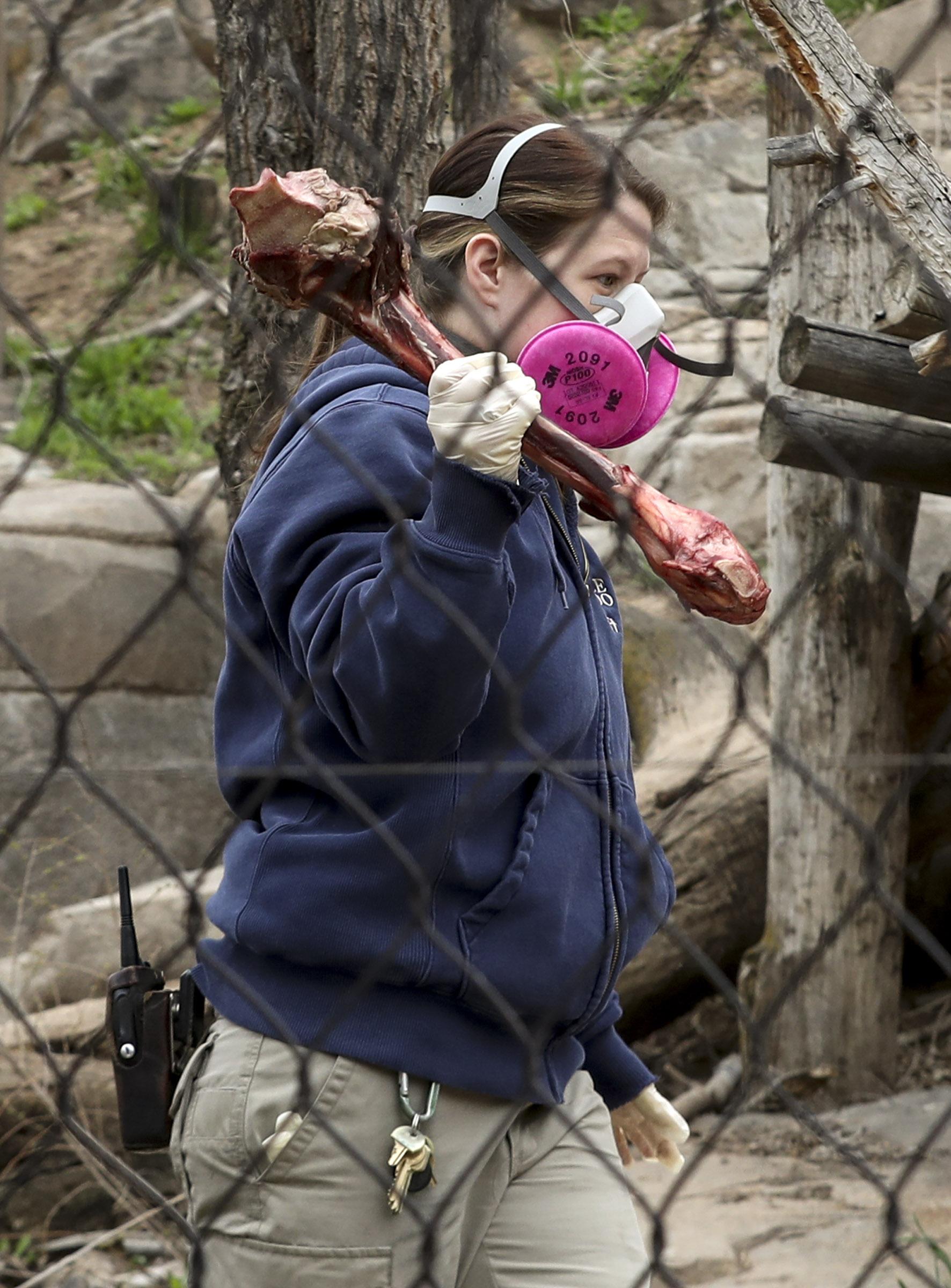Hogle Zoo Taking Coronavirus Precautions With Lions Tigers Deseret News