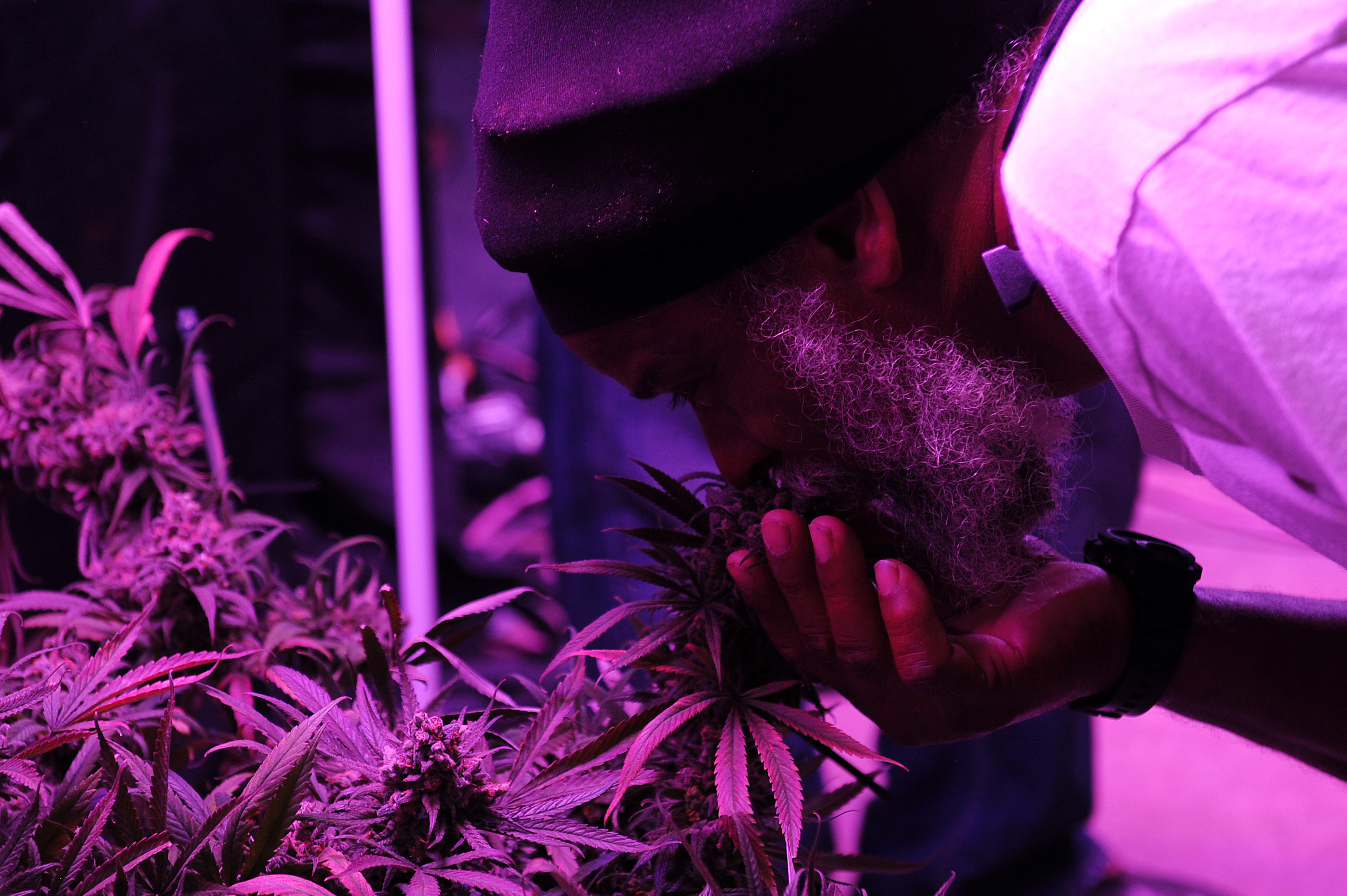 Black people and cannabis