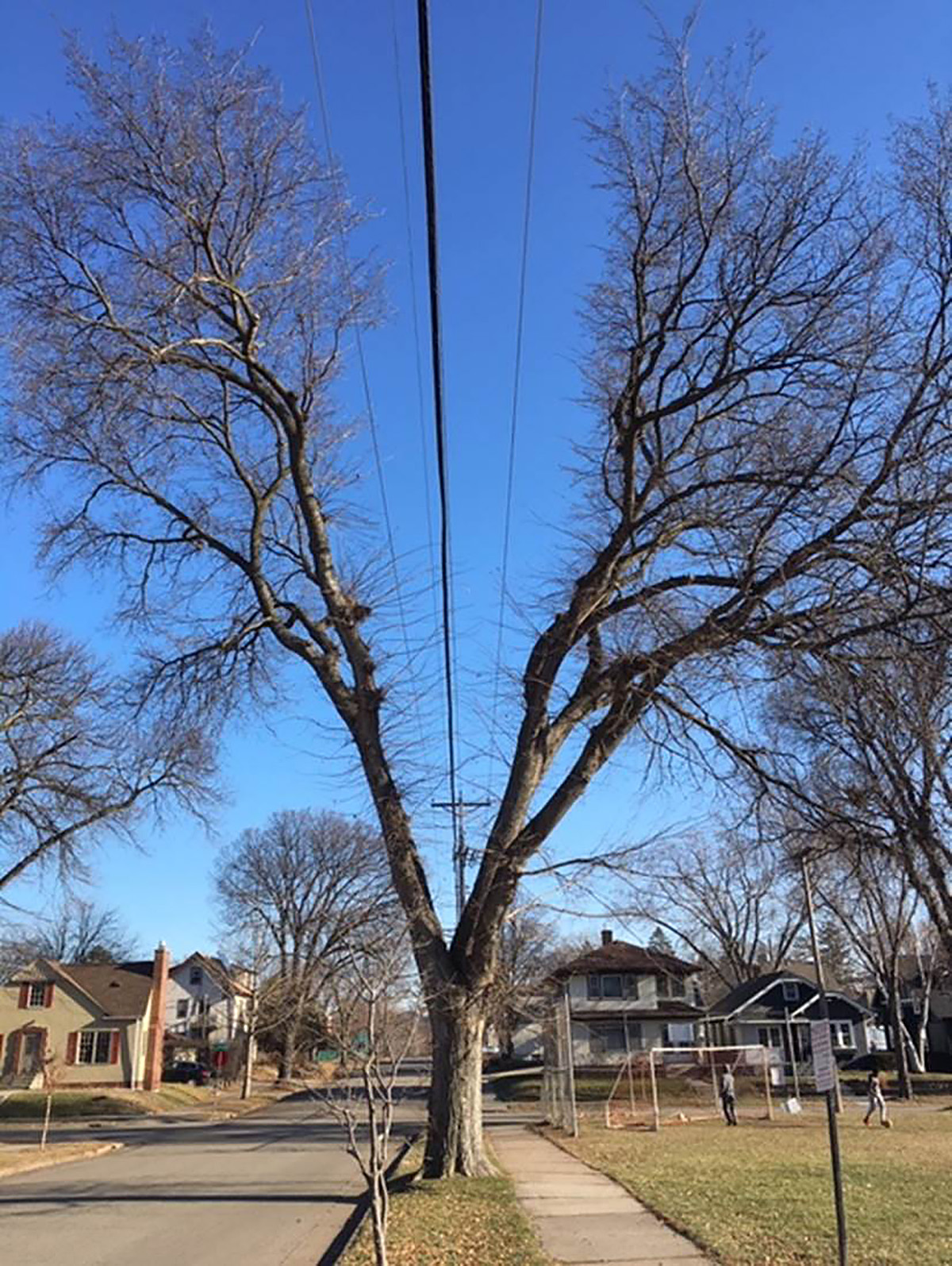 E. 32nd Street in Longfellow in south Minneapolis features a string of trees with deep