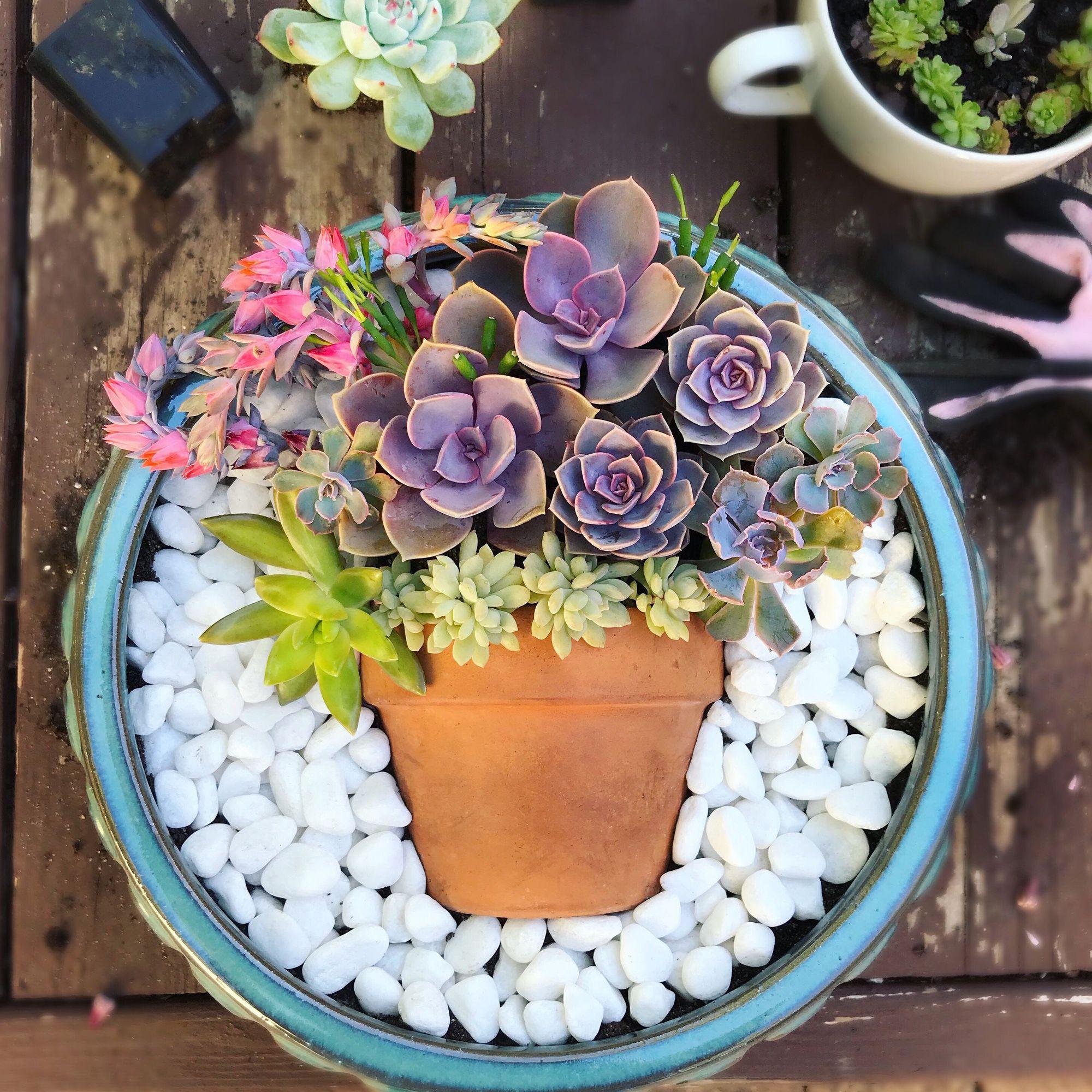 Connie Gliadon makes succulent arrangements.