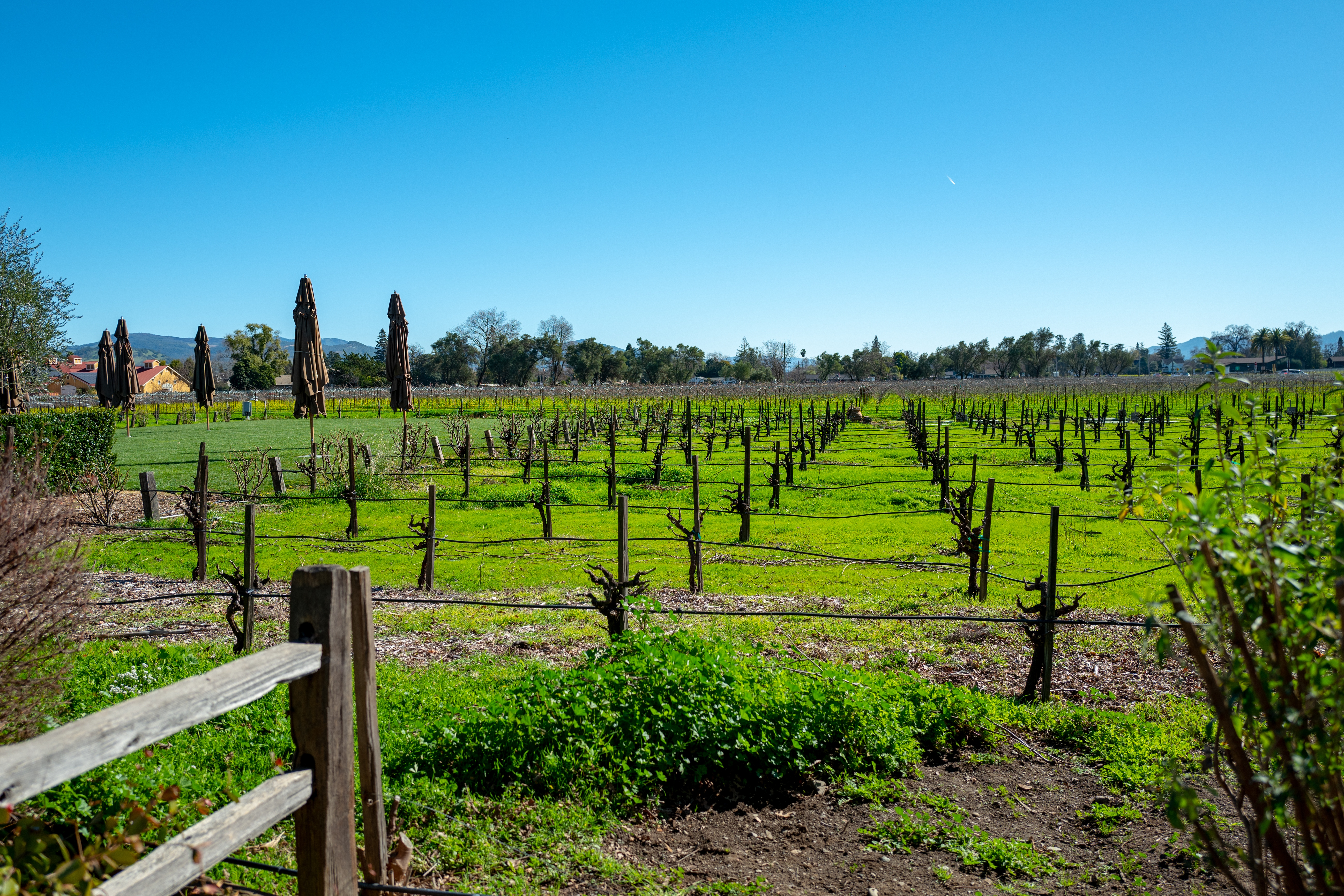 V. Sattui Winery Vineyard