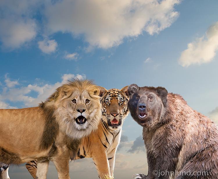 Funny-Lions-Tigers-Bears.0.jpg
