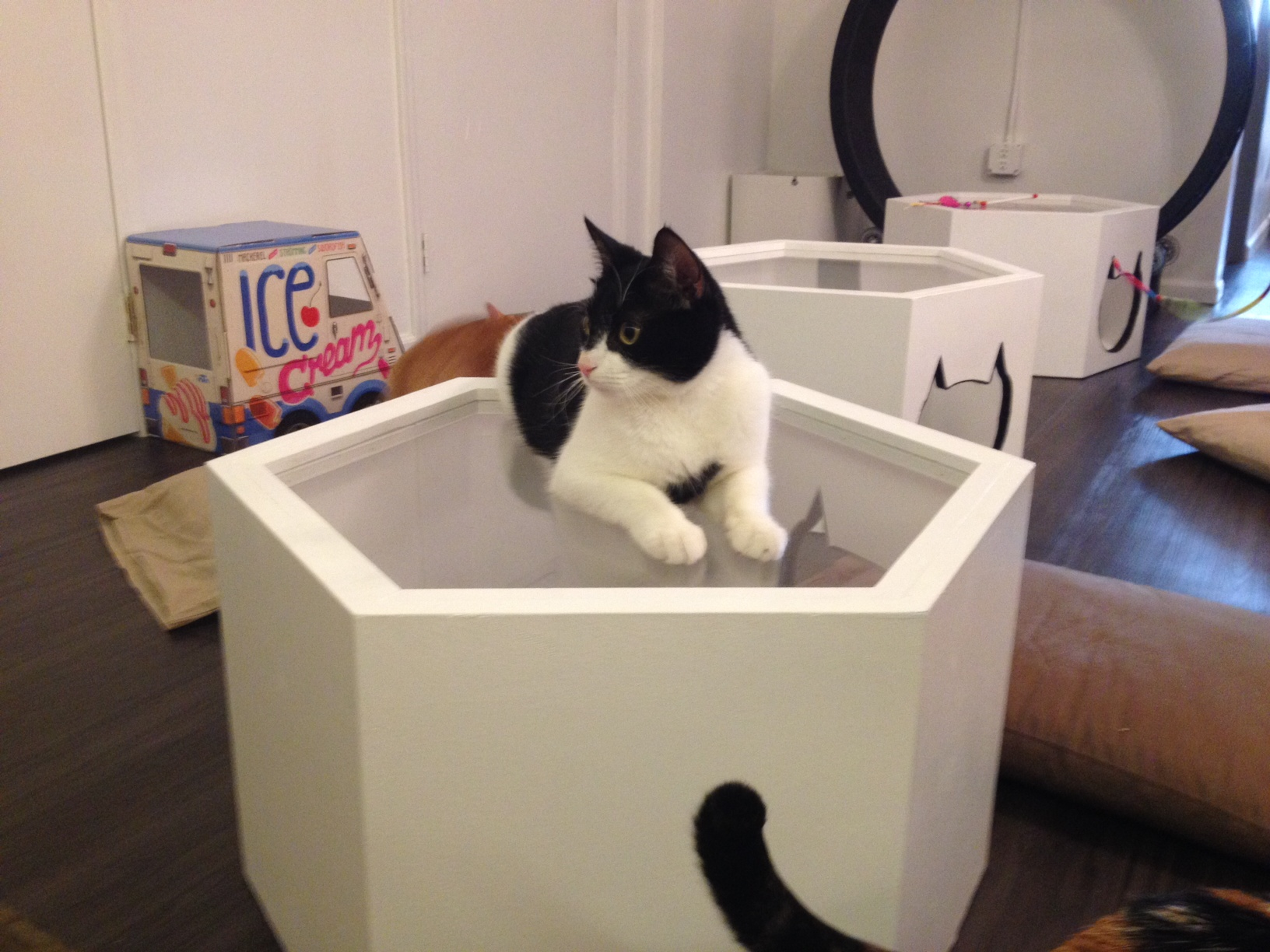 Look Around Meow Parlour New York City S Very First Cat
