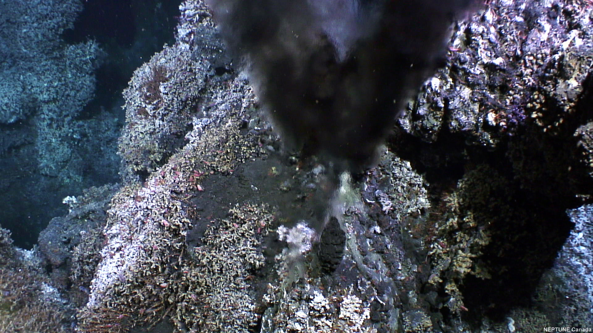 the lost city hydrothermal vents notes The lost city hydrothermal field, an ultramafic-hosted system located 15 km west of the mid-atlantic ridge, has experienced at least 30,000 years of therefore, anme-1 organisms are well dispersed throughout the vent field but are able to thrive only in chimneys that are not venting high-temperature, high-ph fluids,.