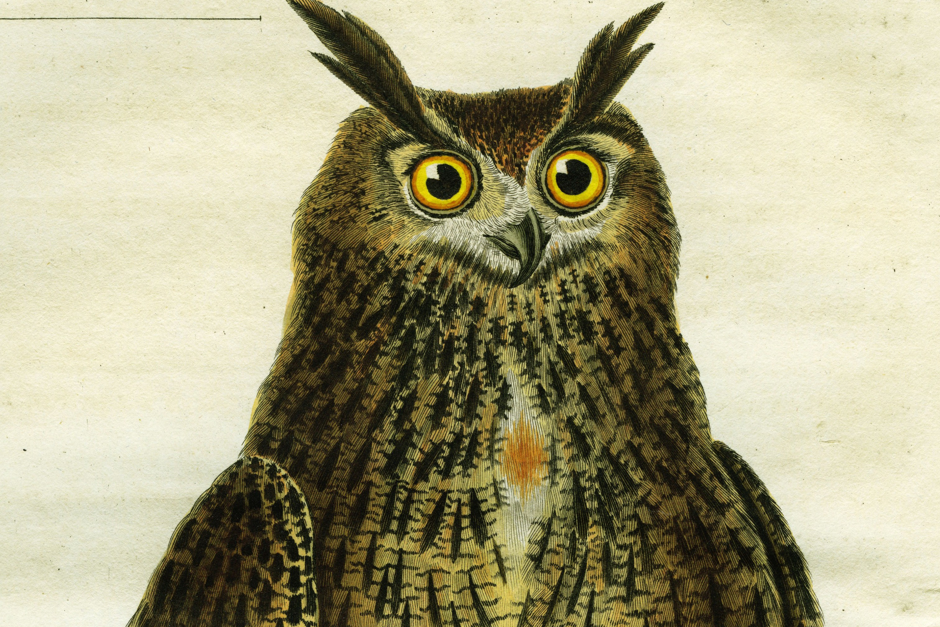 9 questions about the illuminati you were too afraid to ask vox a drawing of an owl from the 1780s the short period of time the illuminati biocorpaavc