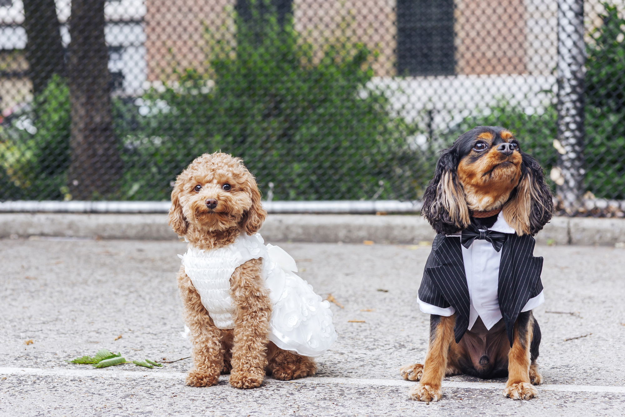 Wedding Dresses for Dogs – Fashion dresses