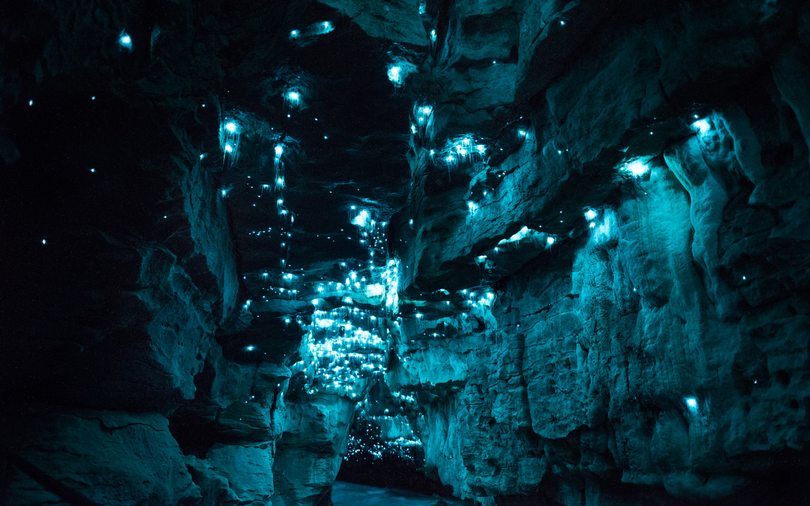 Bioluminescent glow worms turn 30-million-year-old caves into alien ...