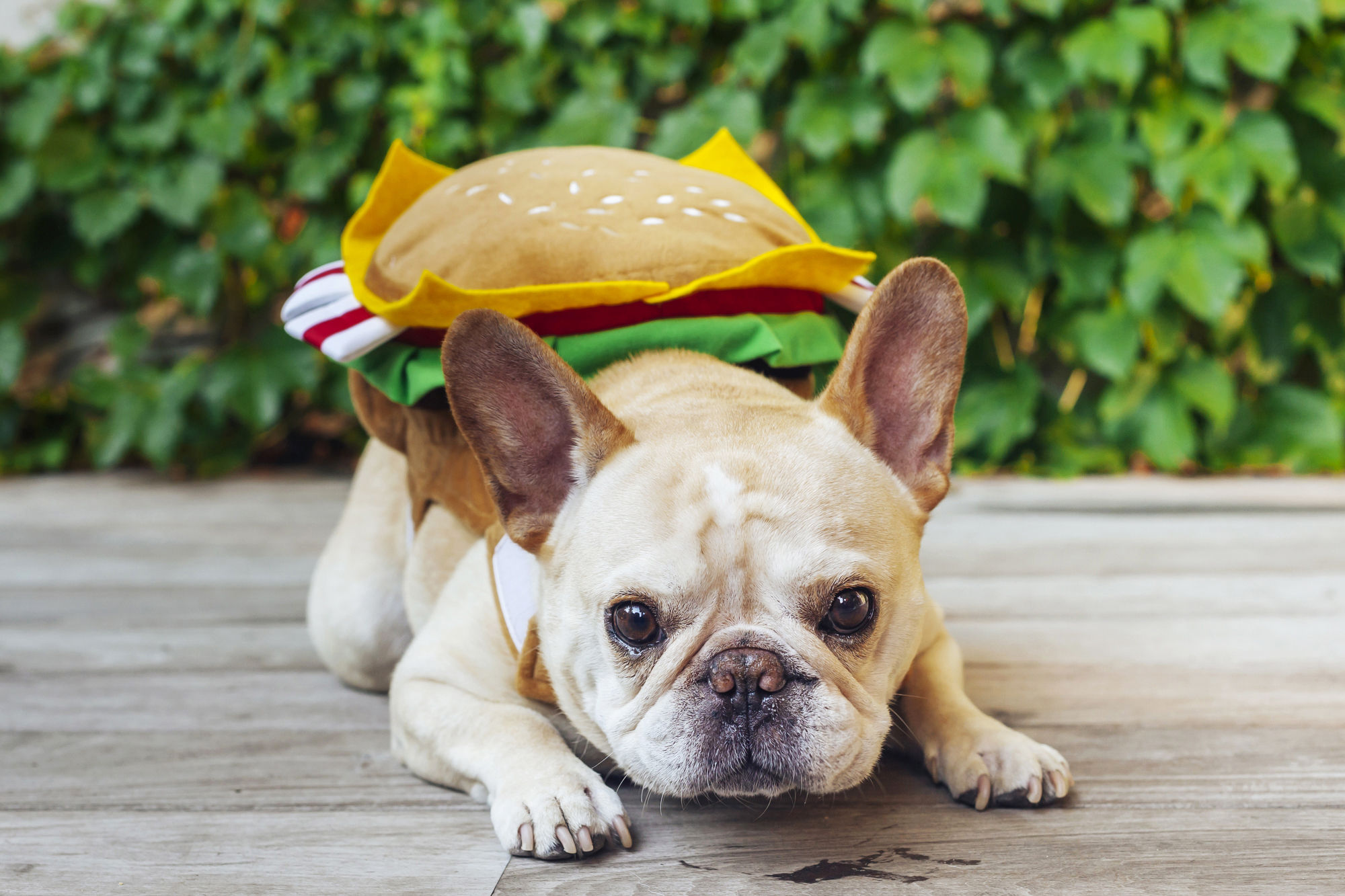 Local Dogs and Cats Who Have Already Picked Out Their Halloween Costumes