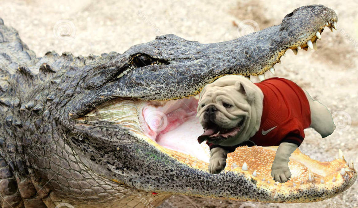 bulldog vs gator mascot fights thinks uga is in trouble against the florida 4762
