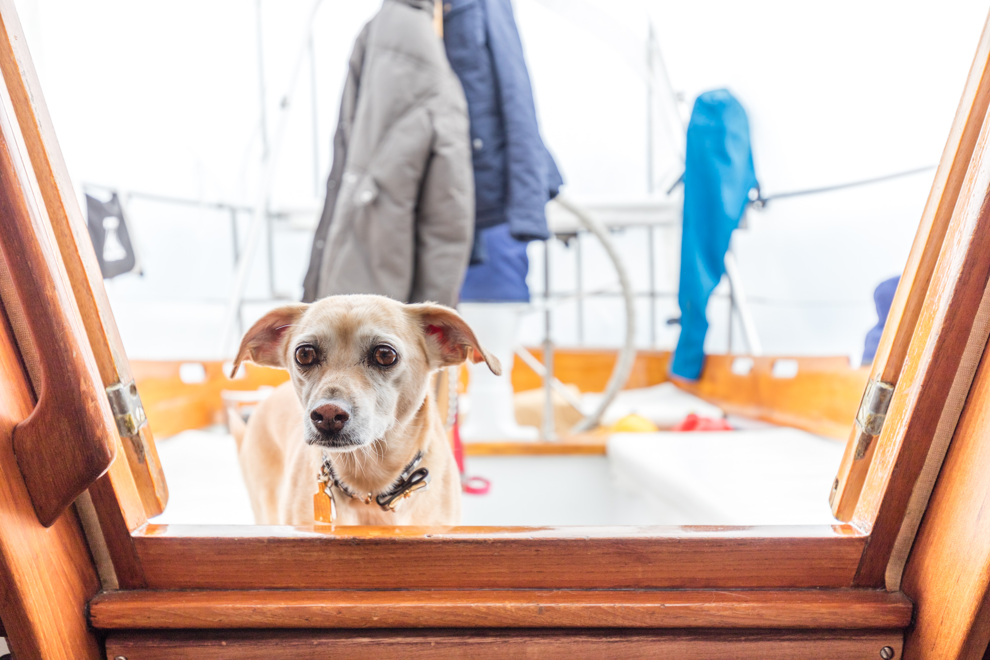 Touring the 200-Square-Foot Sailboat One New York Couple Calls Home