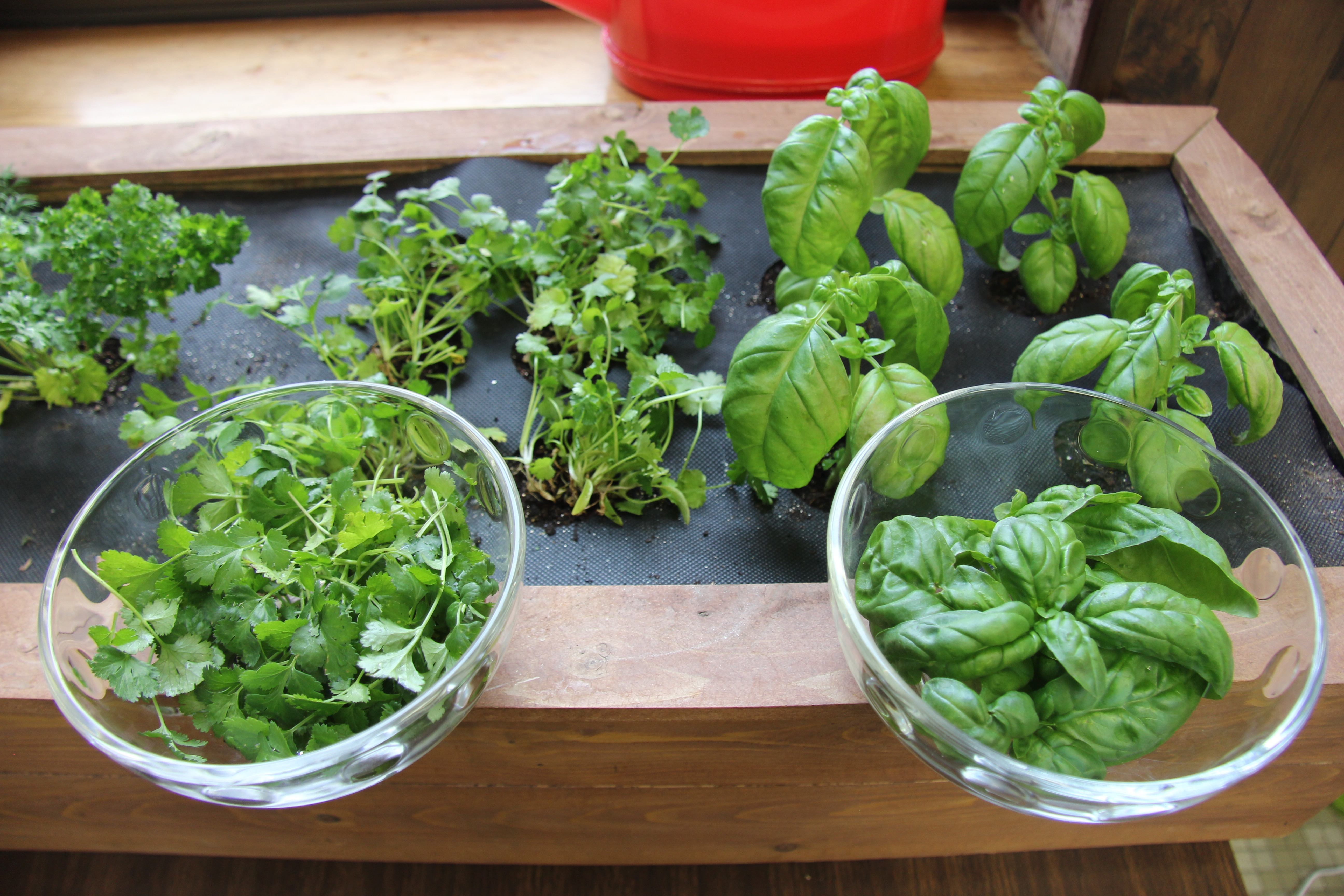 Urban gardening: Tips and products for the space-starved