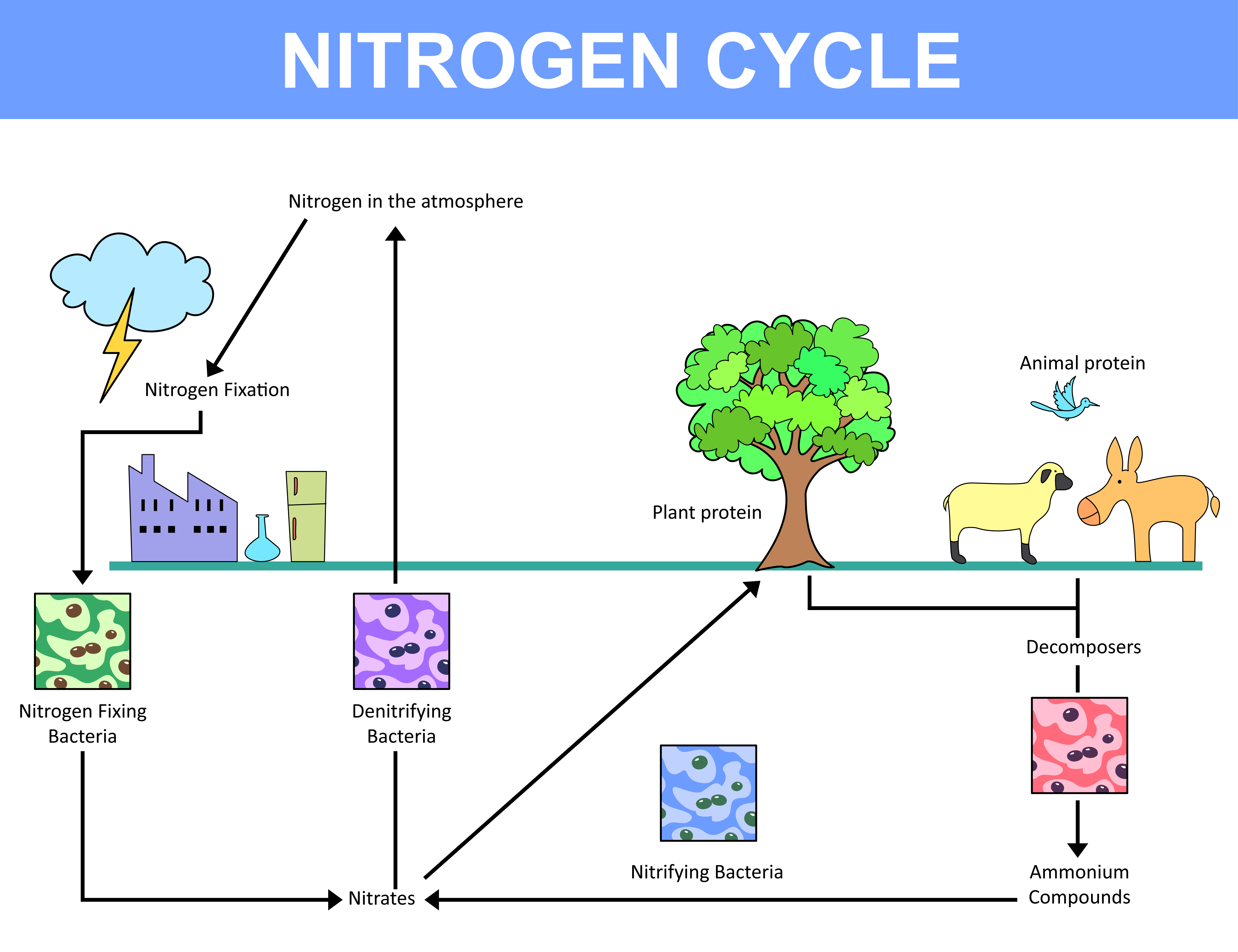 the nutrient cycle and the nitrogen Nitrogen is an essential nutrient for plant growth, development and reproduction  the nitrogen cycle nitrogen can go through many transformations in the soil.