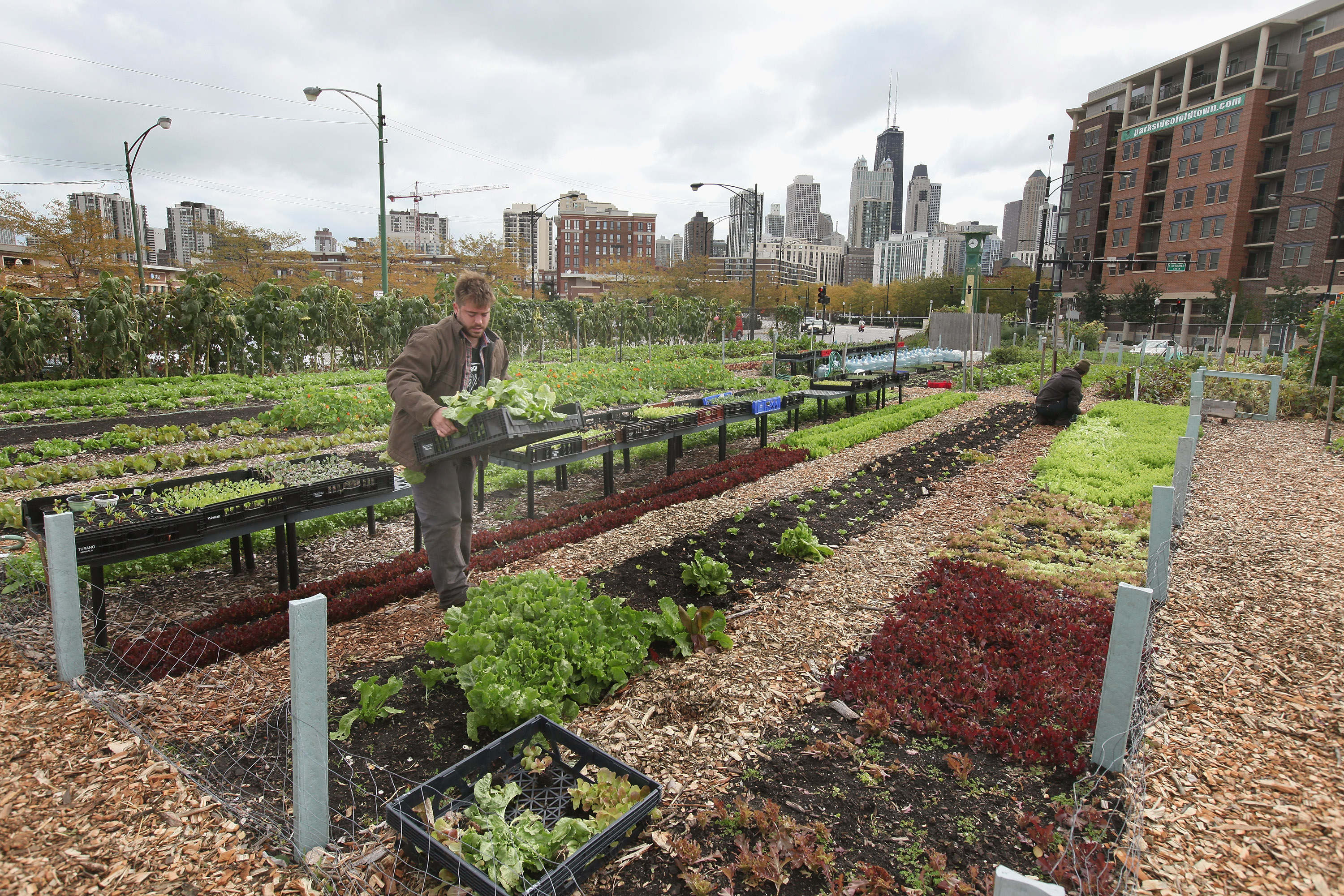 The real value of urban farming hint it 39 s not always the food vox - Small space farming image ...
