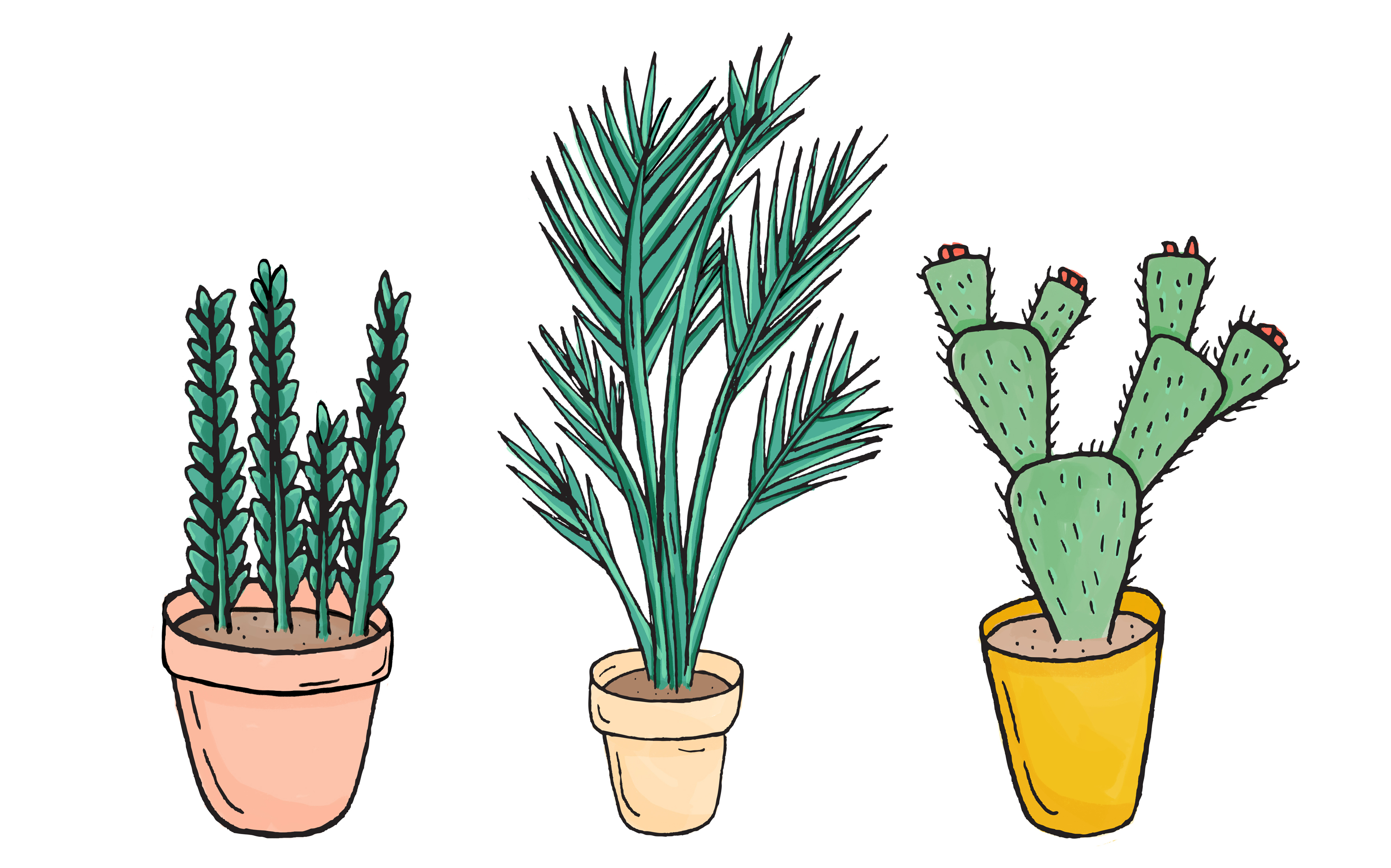 How to shop for plants online