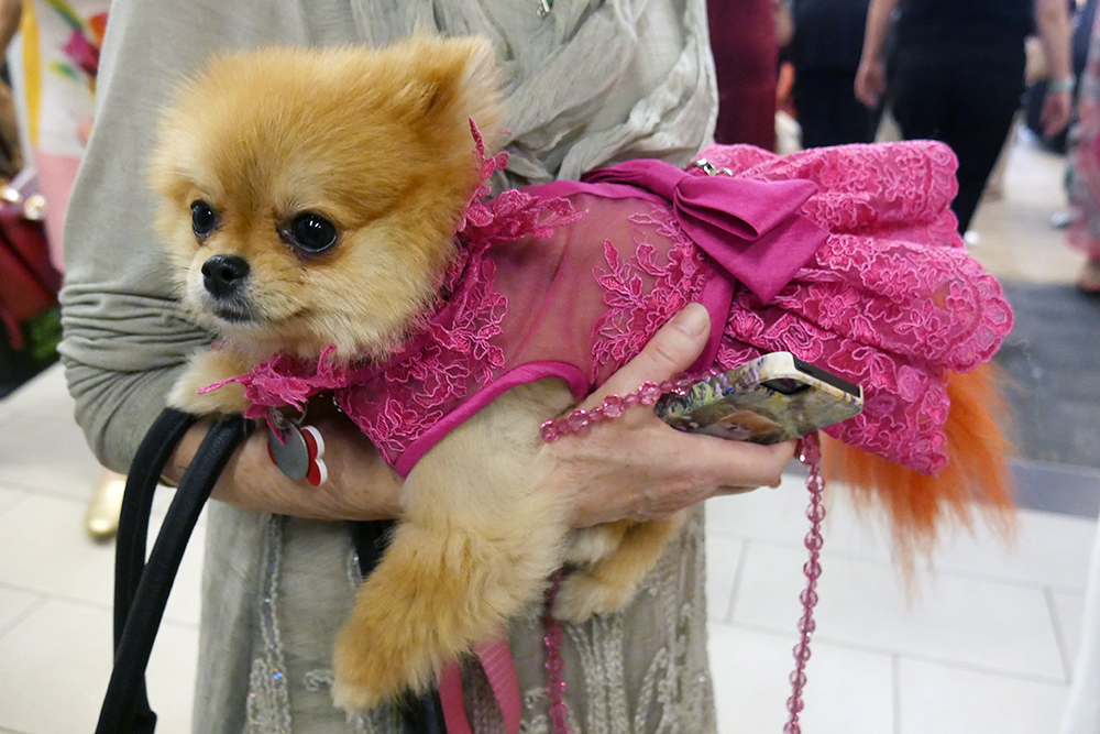 The Most Stylish Pups Spotted At Las Dog Film Fest Racked La