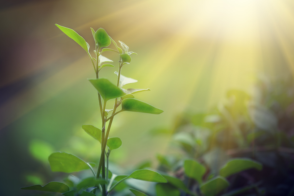 Burning liquid sunlight instead of fossil fuels is - Plants that need no sunlight ...