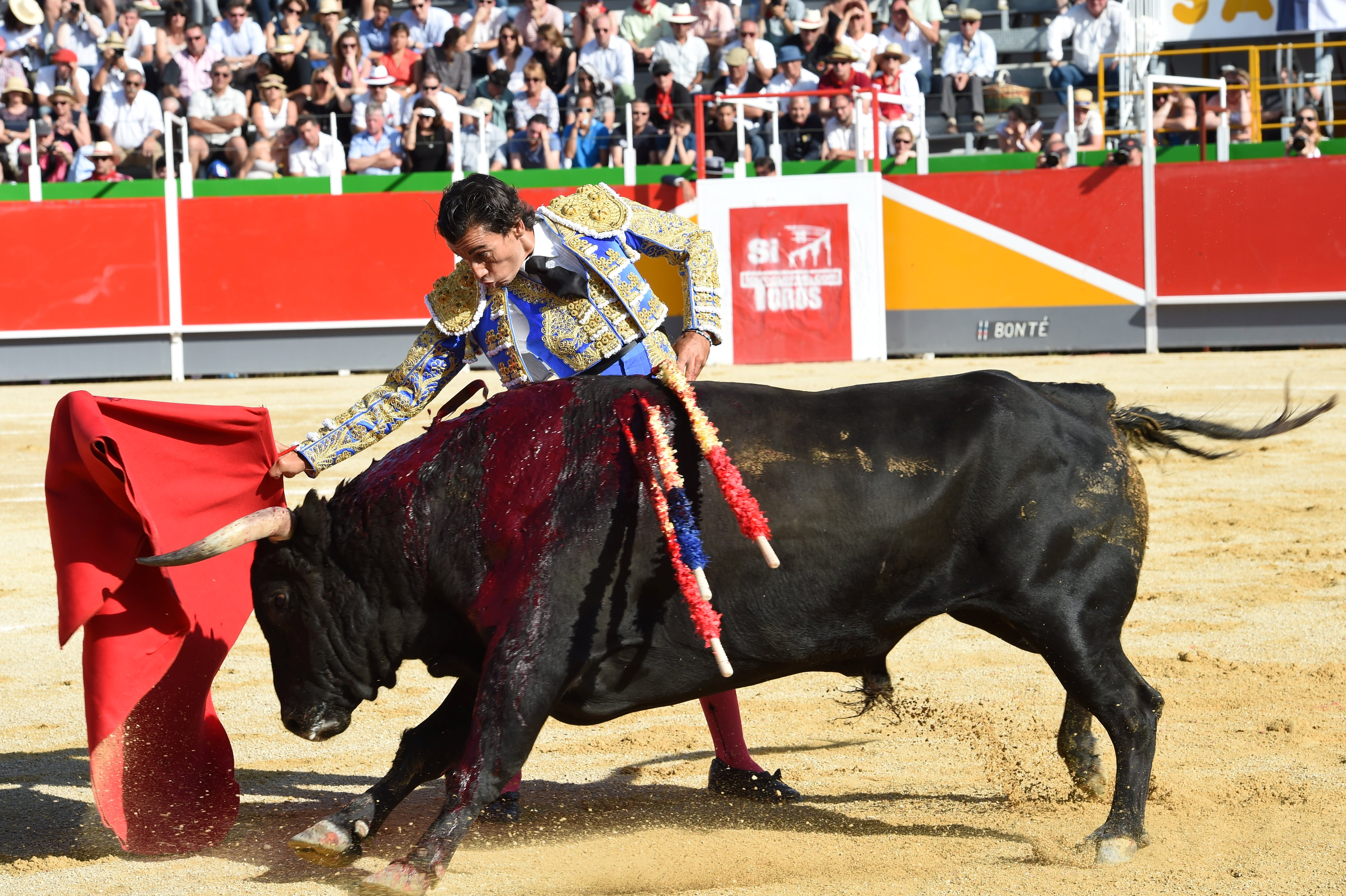 spanish matador curro diaz tortures a profusely bleeding bull mehdi fedouachafpgetty images