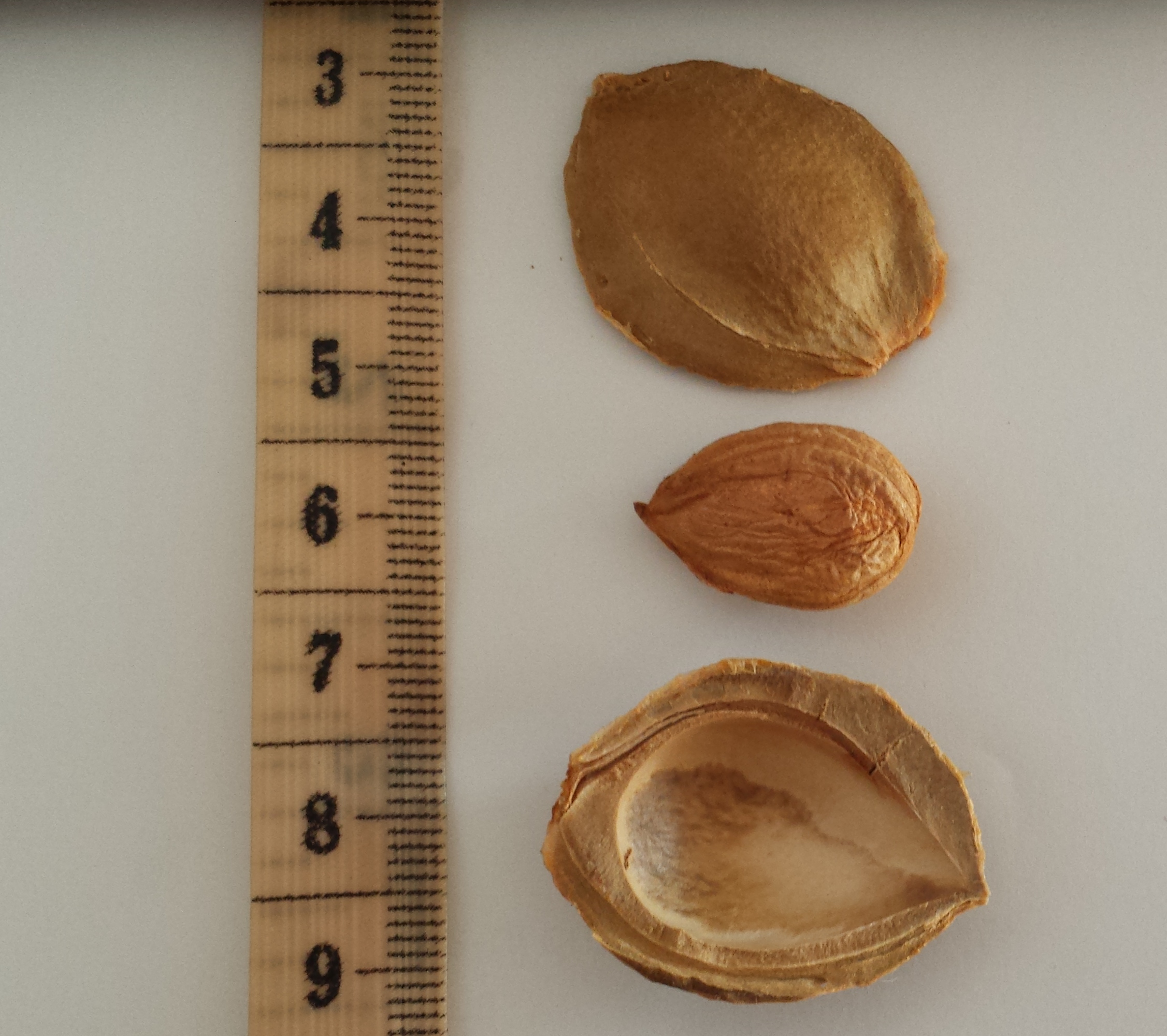 Man develops cyanide poisoning from apricot kernel extract