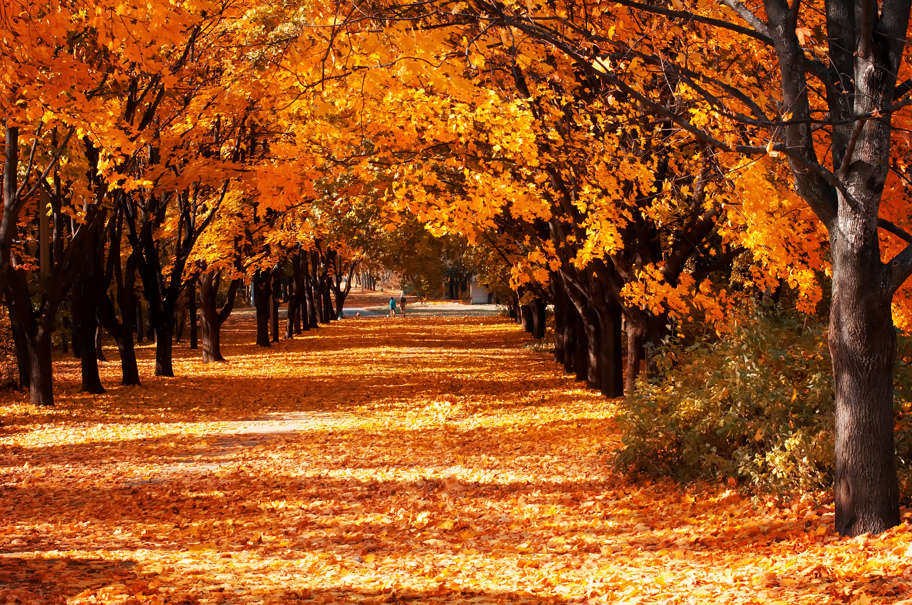 Celebrate fall with this autumnal playlist