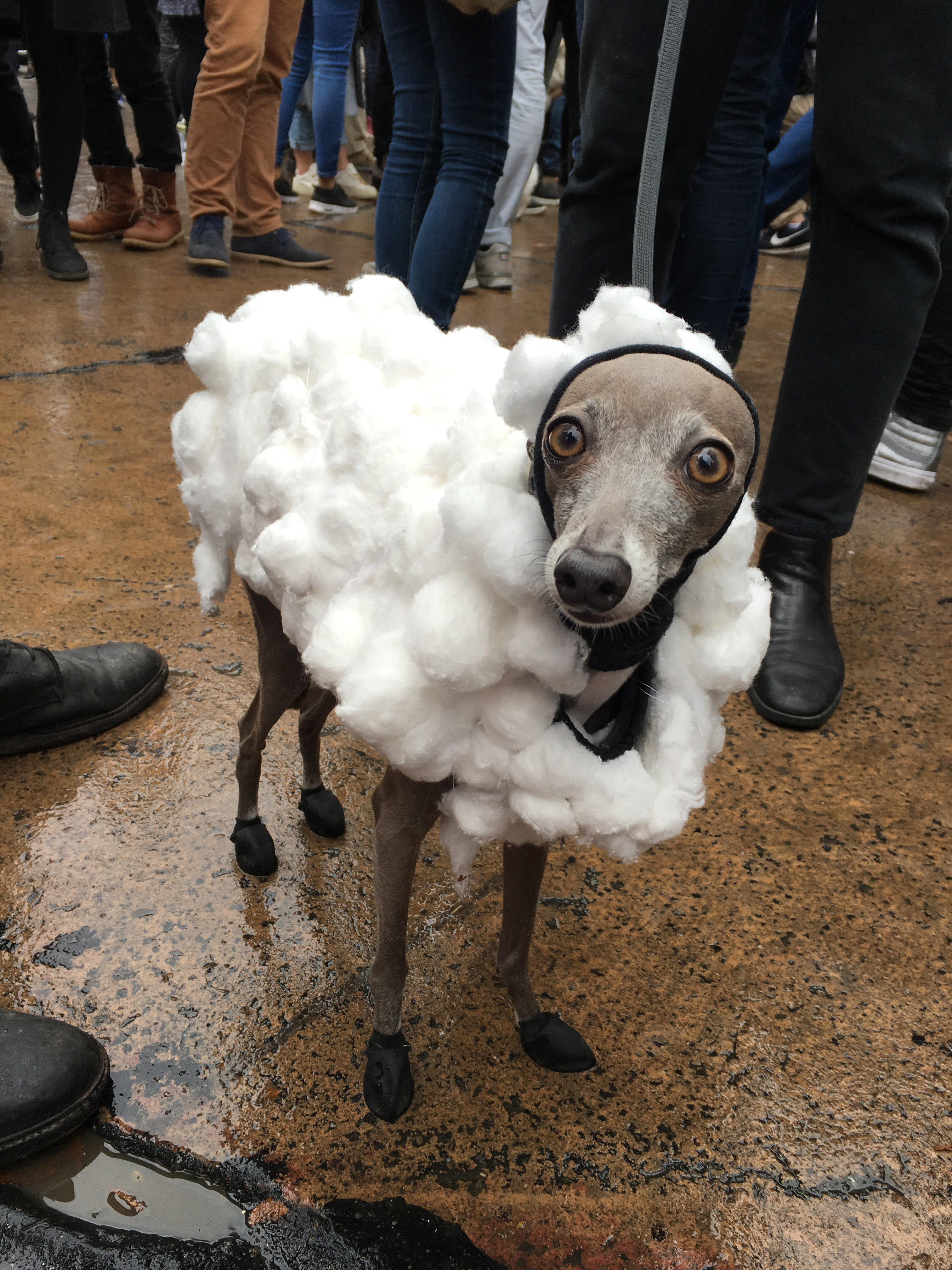 The Tompkins Square Halloween Dog Parade was the best day of my ...