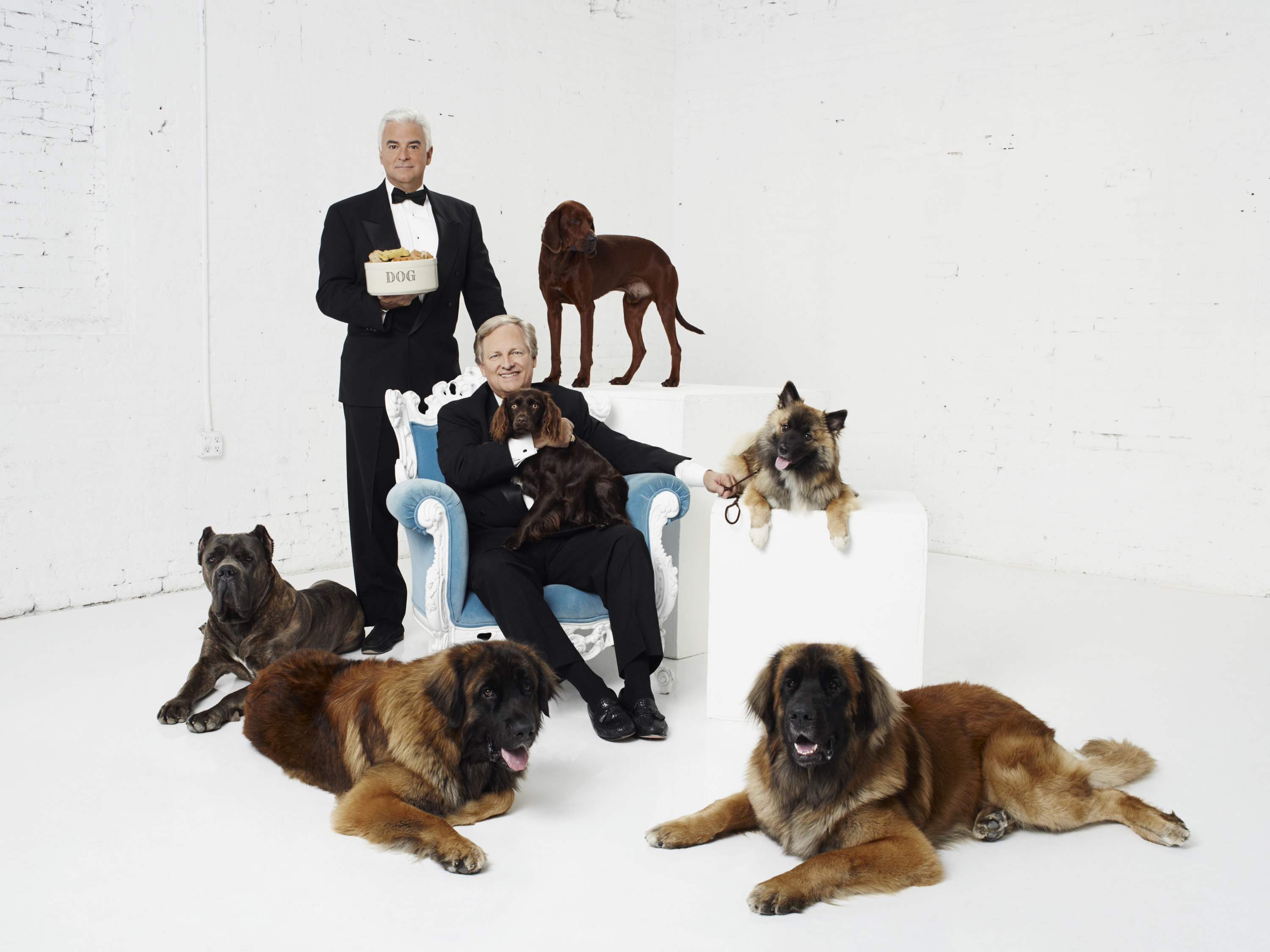 What Time Is The National Dog Show On Thanksgiving