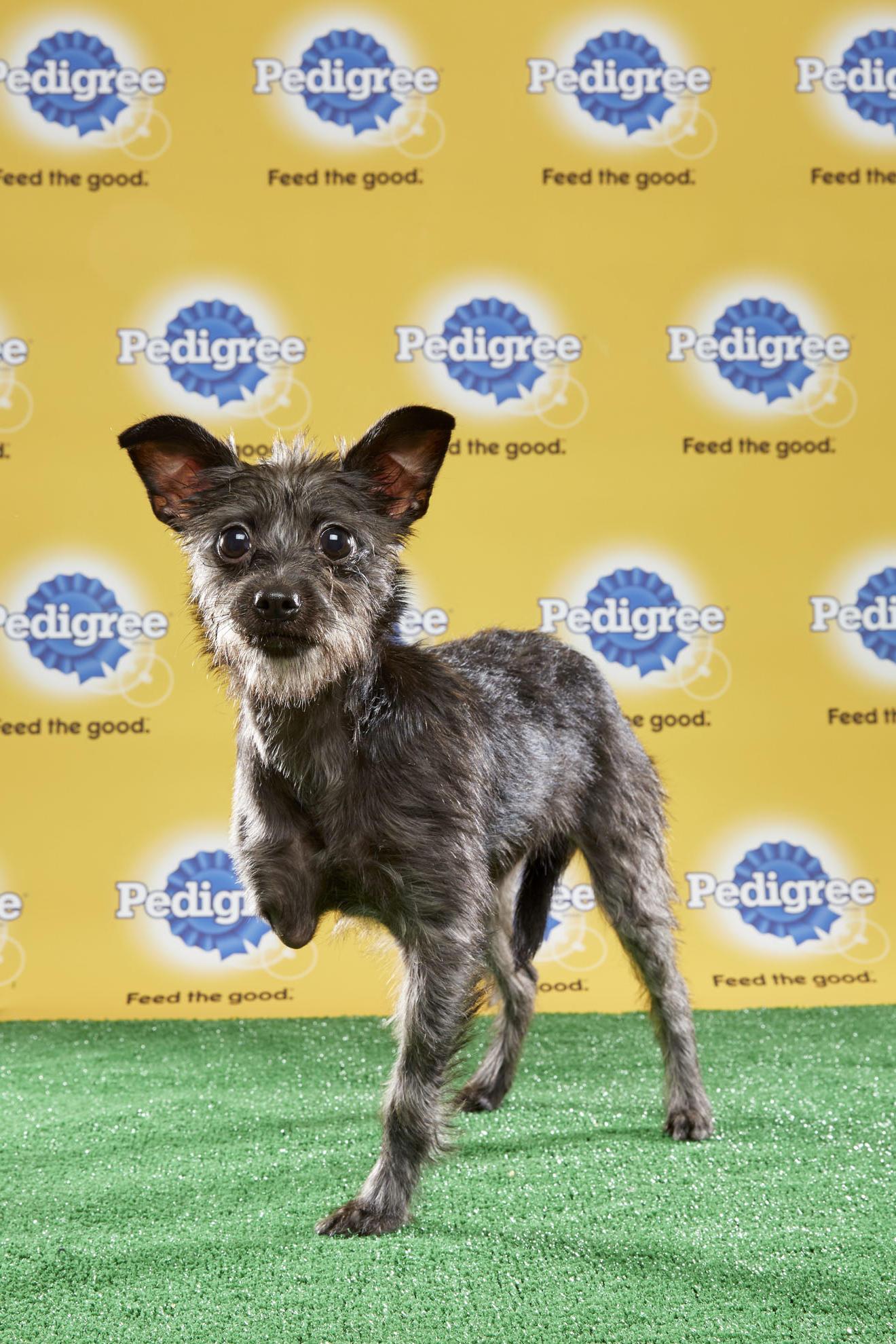 Puppy Bowl Lucky  Legged Dog