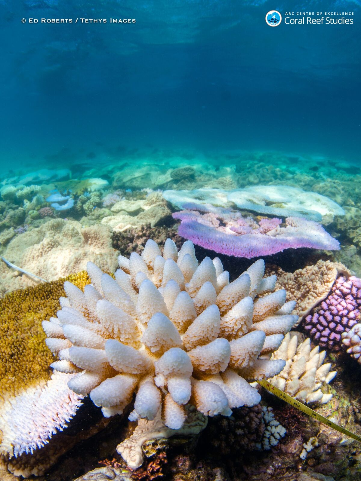how to reduce climate change in reefs