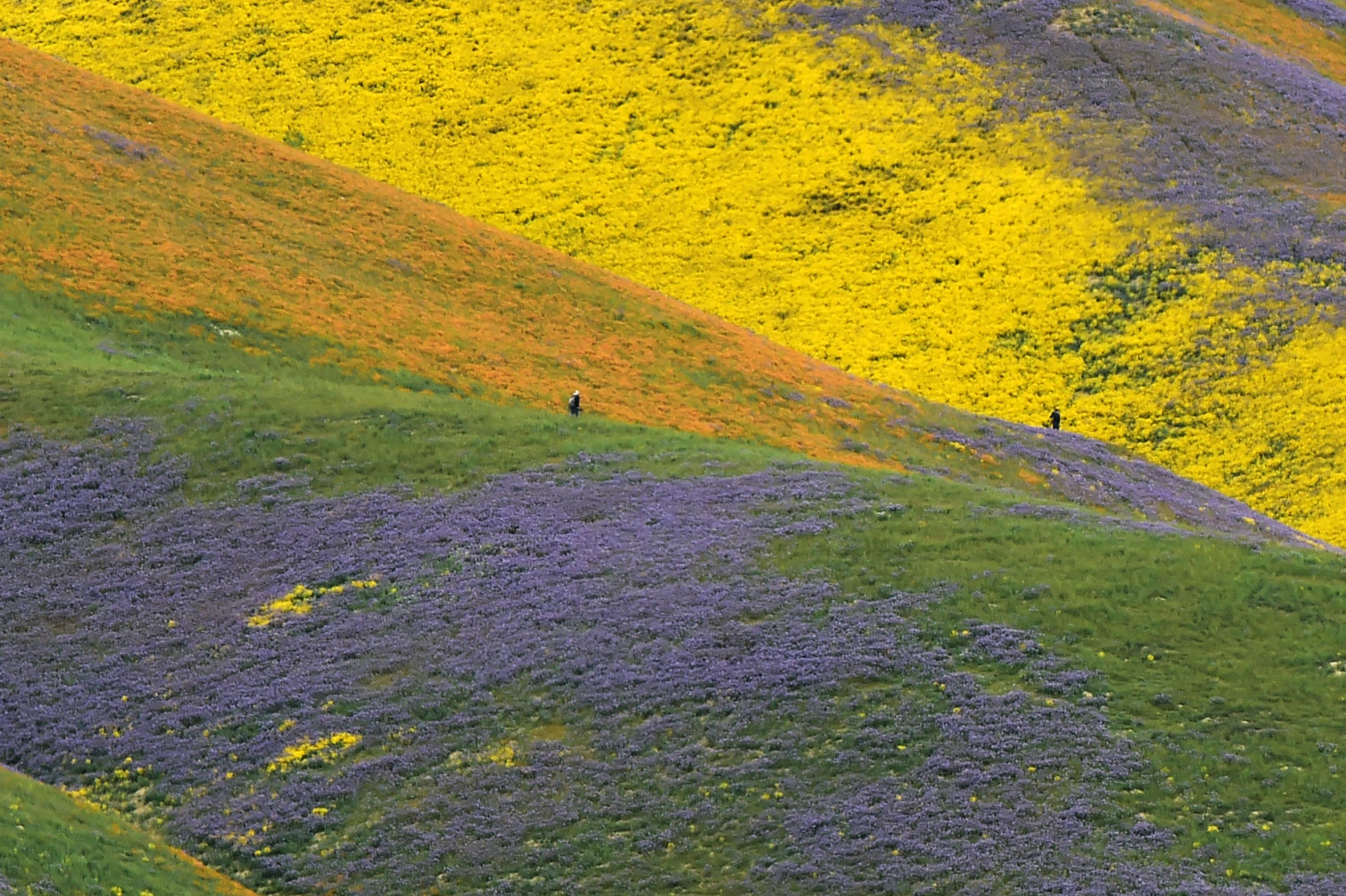 Photos The Super Bloom In California S Desert After The