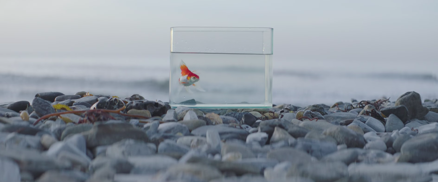 One video big fish by vince staples the verge for Big fish soundtrack