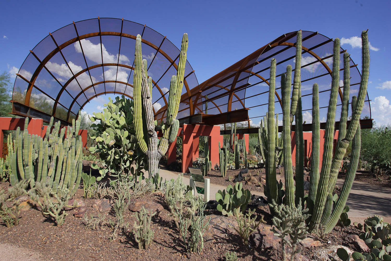 Cacti Stand Tall At The Desert Botanical Garden In Phoenix. Courtesy Of  Desert Botanical Garden