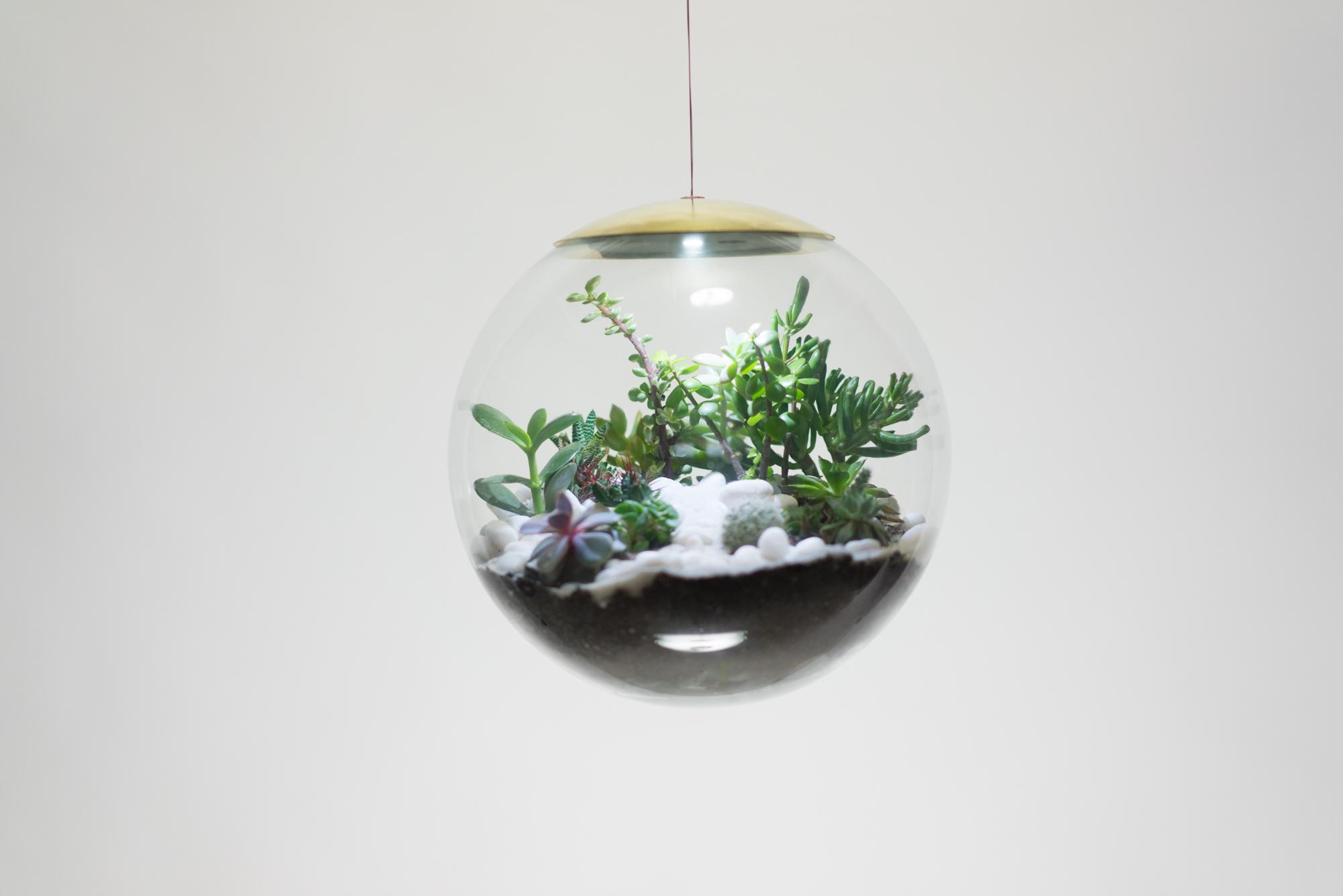 these terrarium lamps are pure plant genius curbed