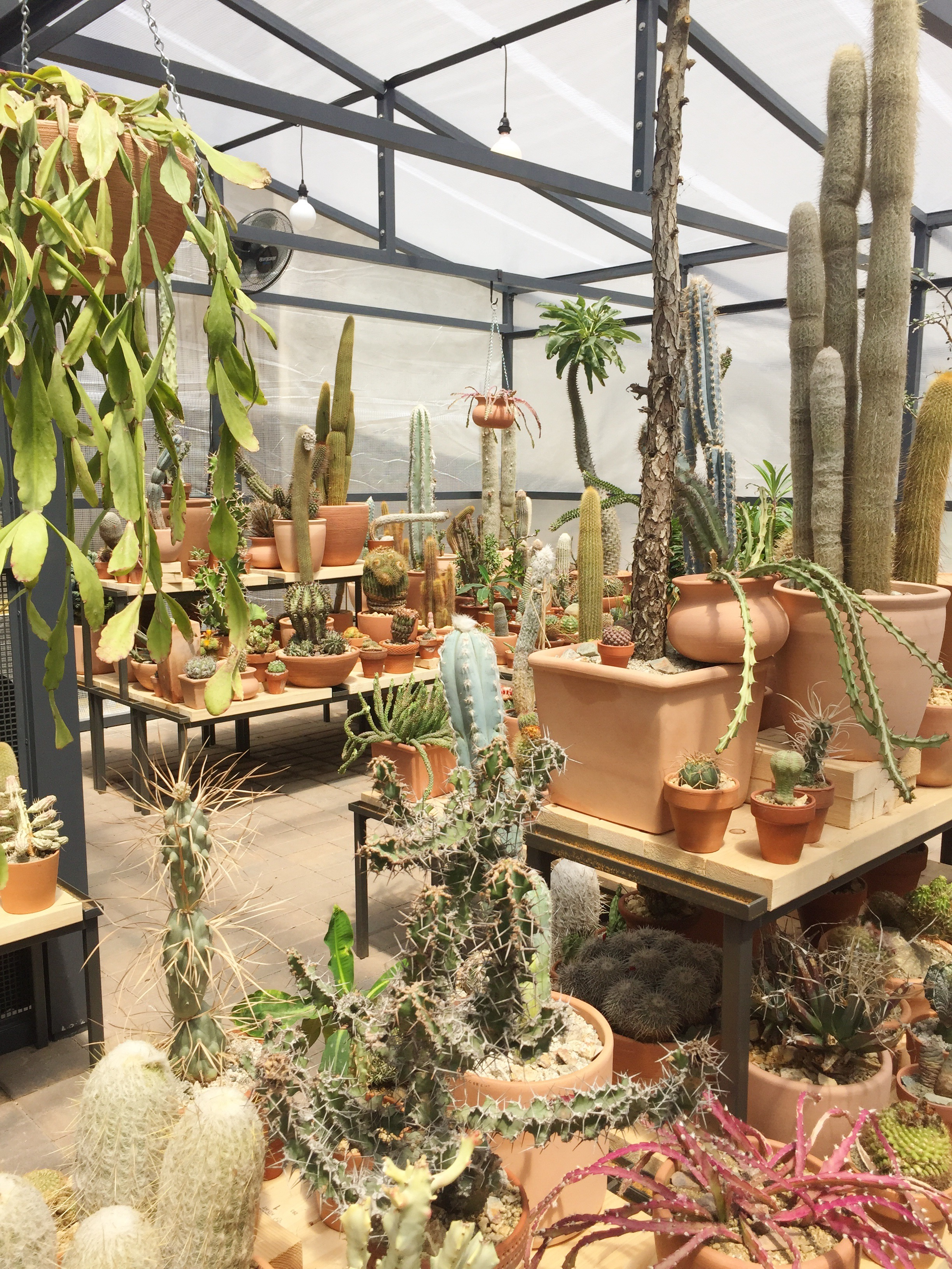 nyc s coolest new pop up shop is a greenhouse with 1 000 cacti