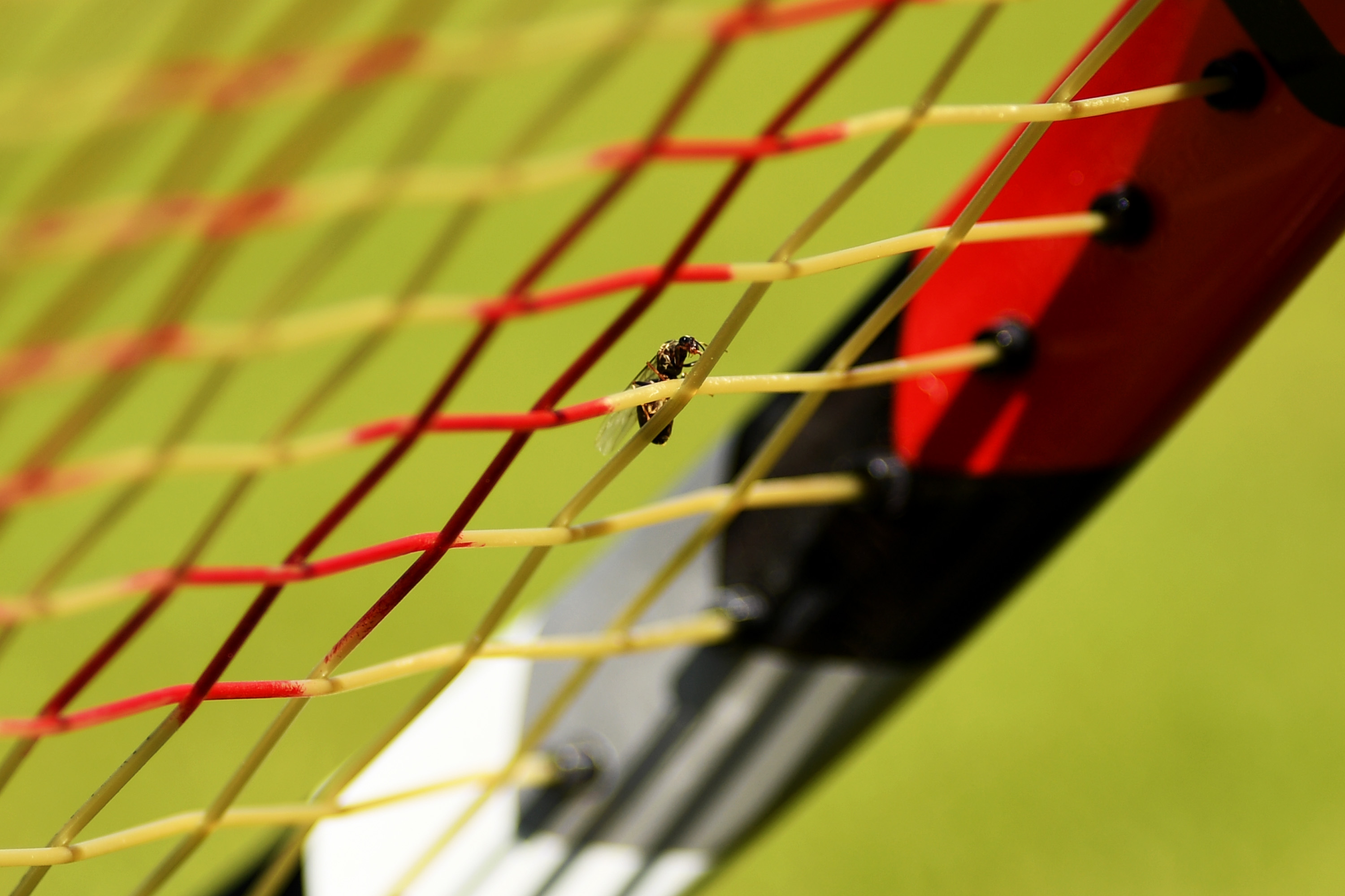 Flying ants bug tennis players at Wimbledon
