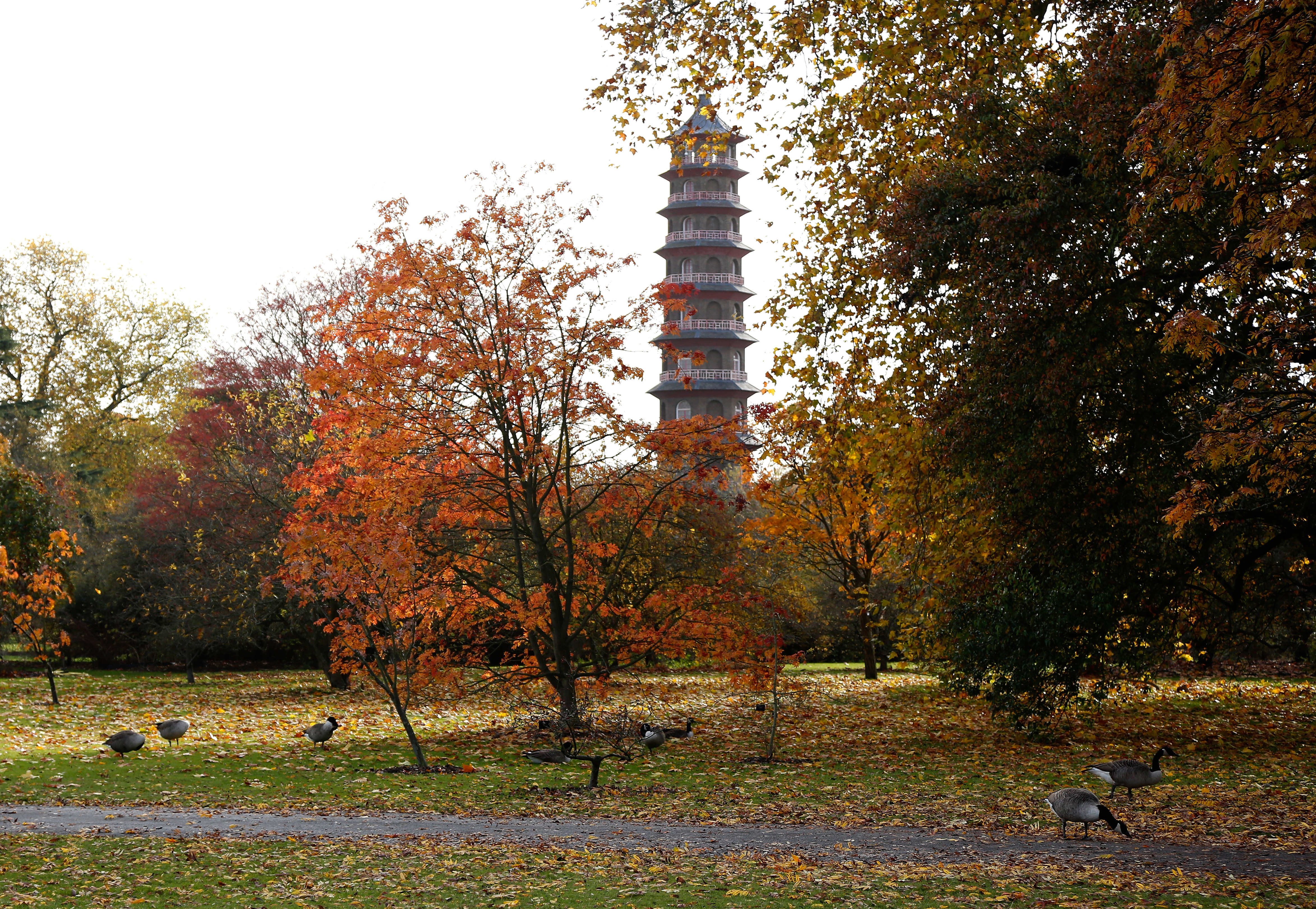The Great Pagoda Through The Trees At Kew Gardens. Ben Perry/Getty Images