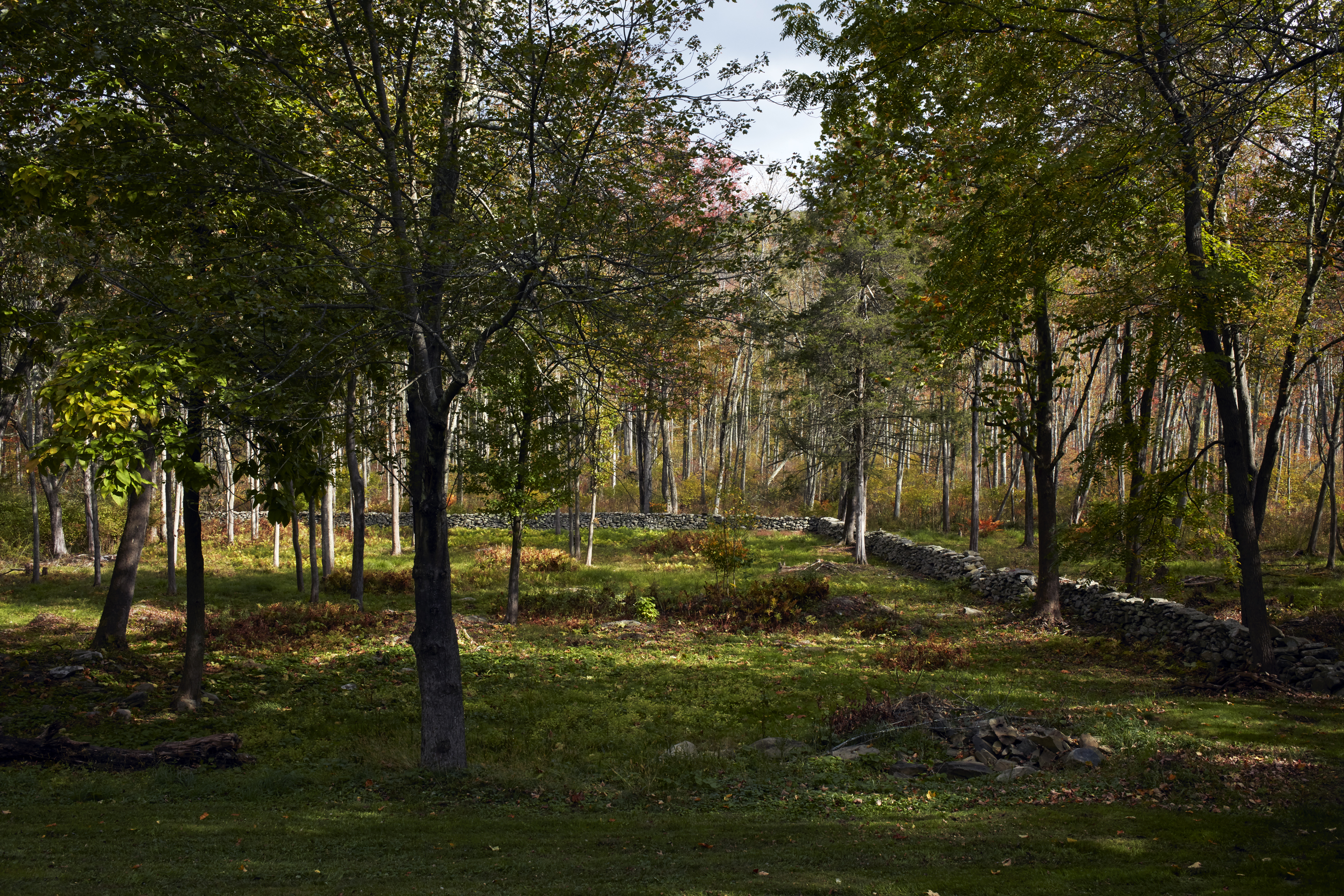 The backyard of the home has several large trees and long stretches of stone walls.