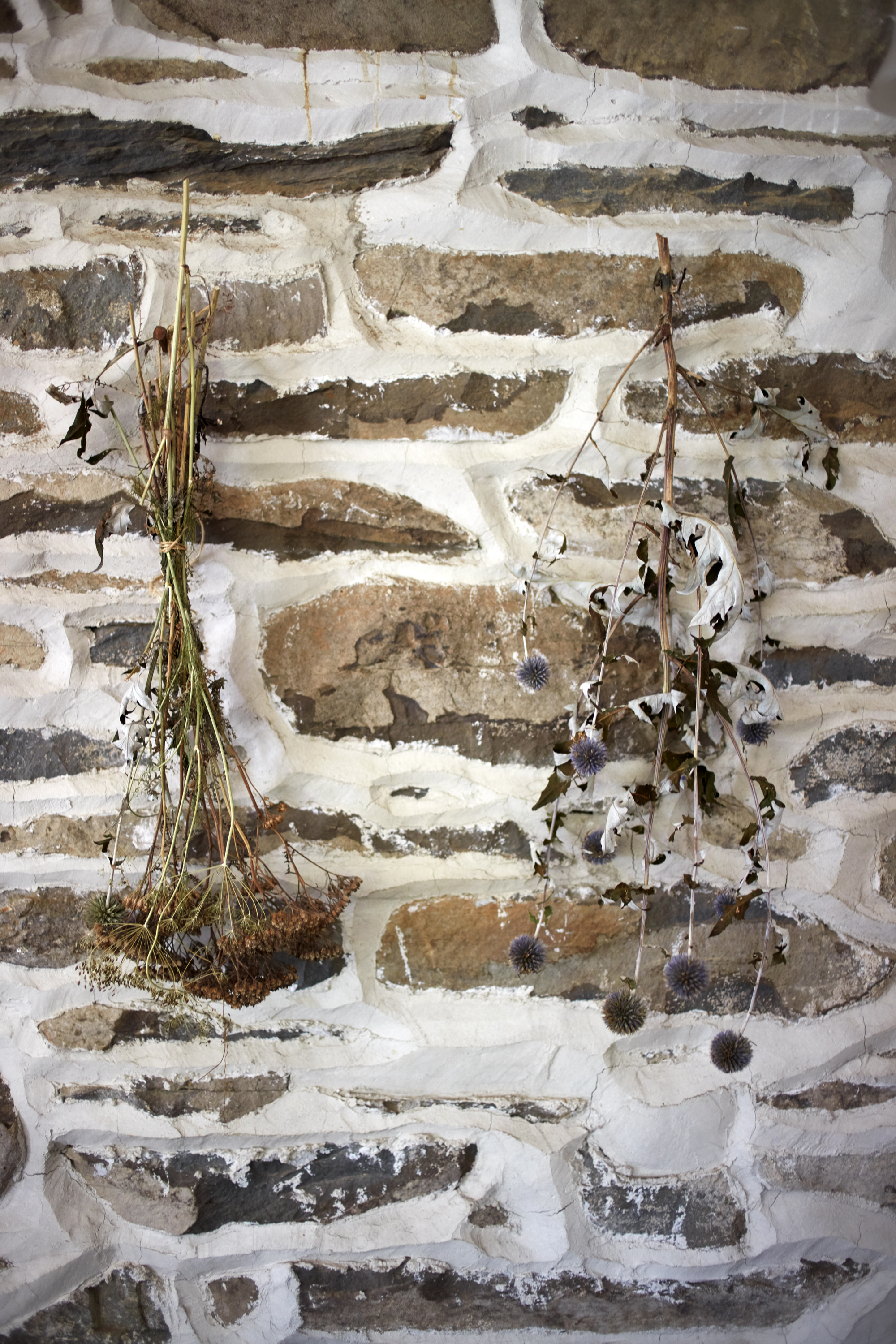 A detail of the stone wall with bunches of dried flowers hanging on it.