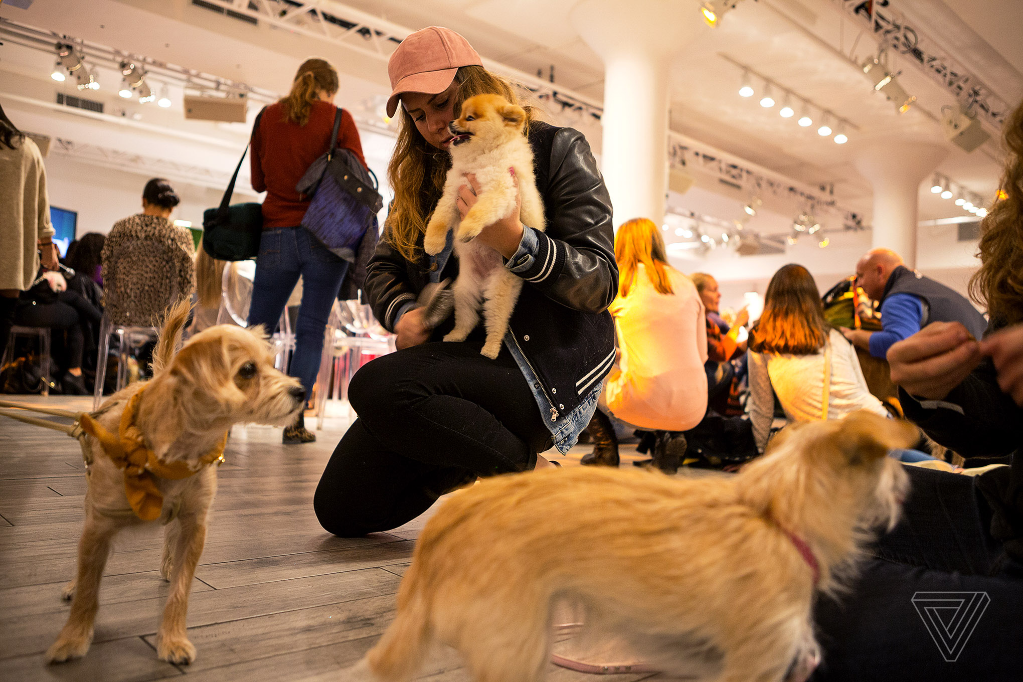 At PetCon, Instagram-famous dogs meet their adoring fans ...