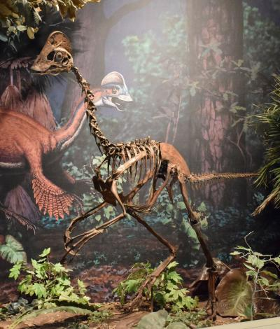Anzu wyliei displayed at the Carnegie Museum of Natural History.